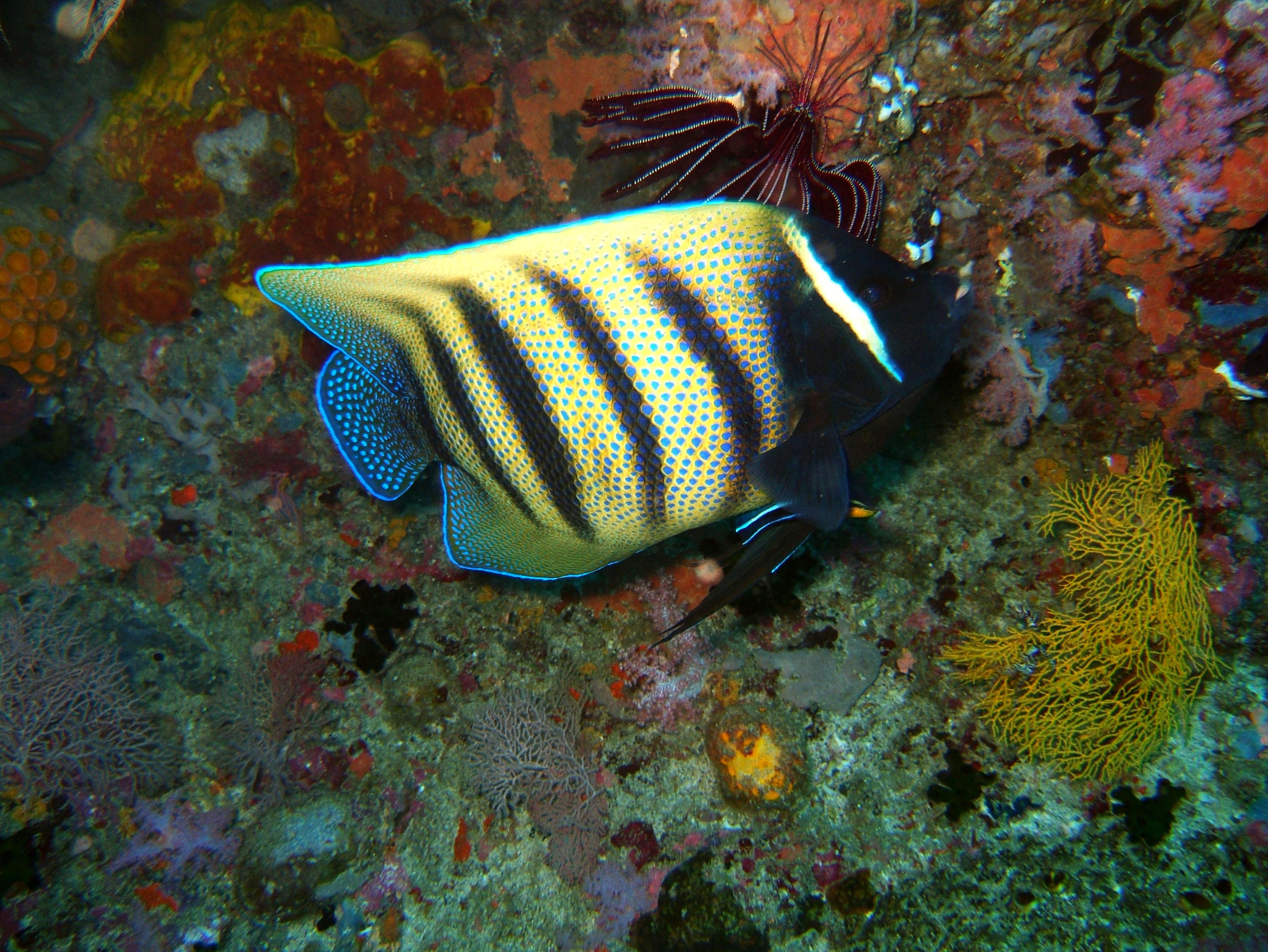 Dive 18 Philippines Mindoro Sabang Canyons Nov 2005 03