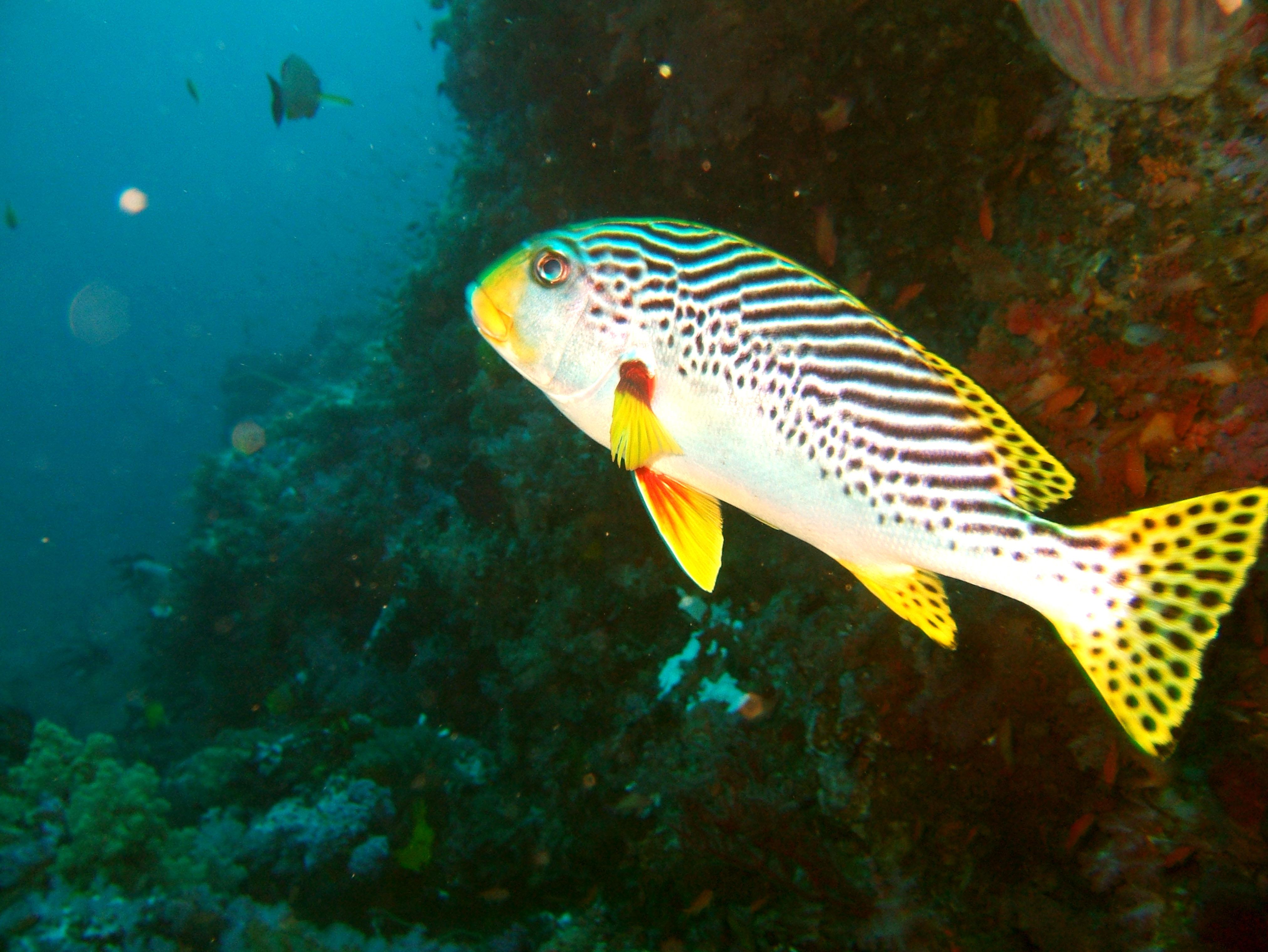 Dive 18 Philippines Mindoro Sabang Canyons Nov 2005 08