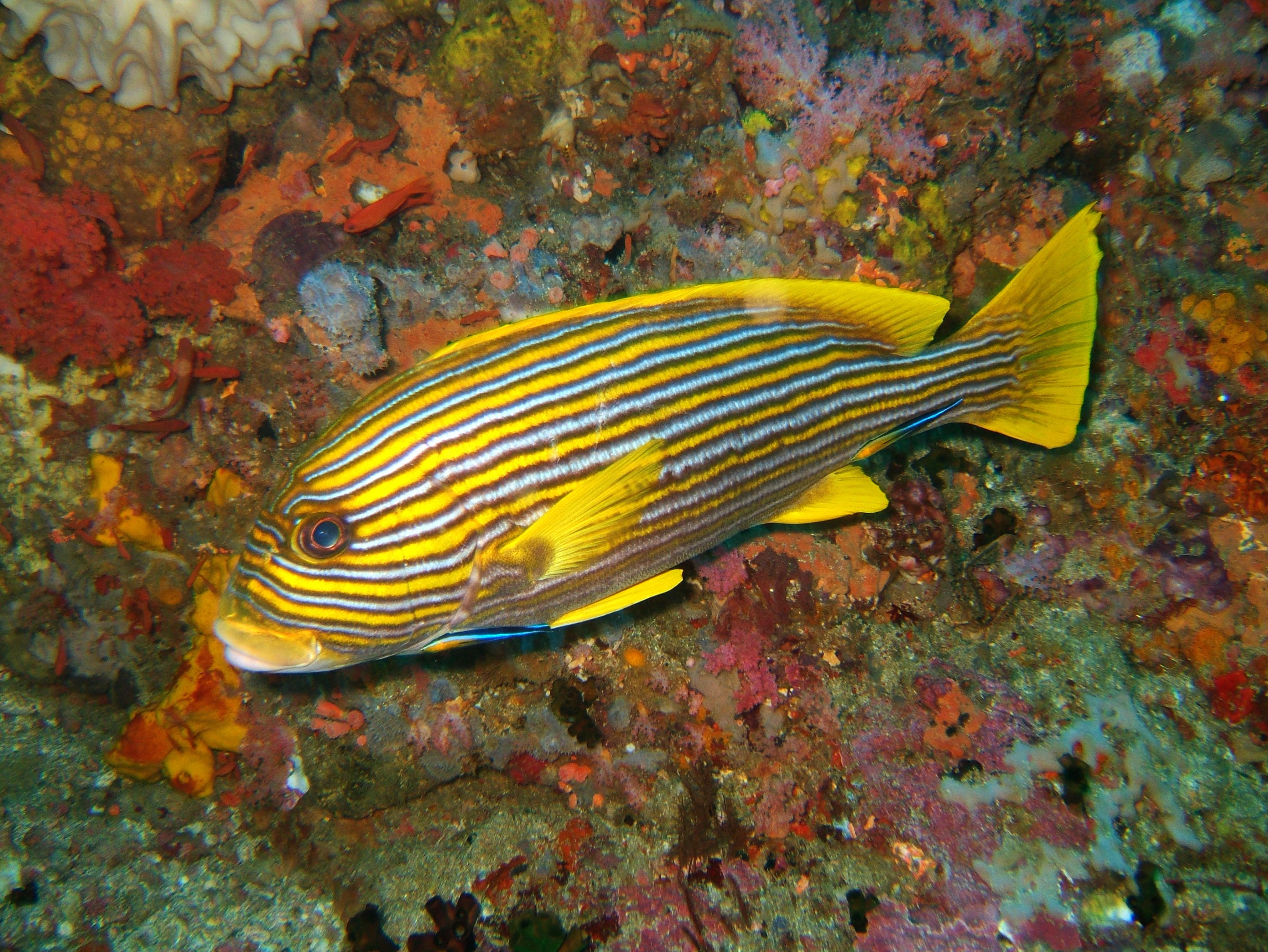 Dive 18 Philippines Mindoro Sabang Canyons Nov 2005 11