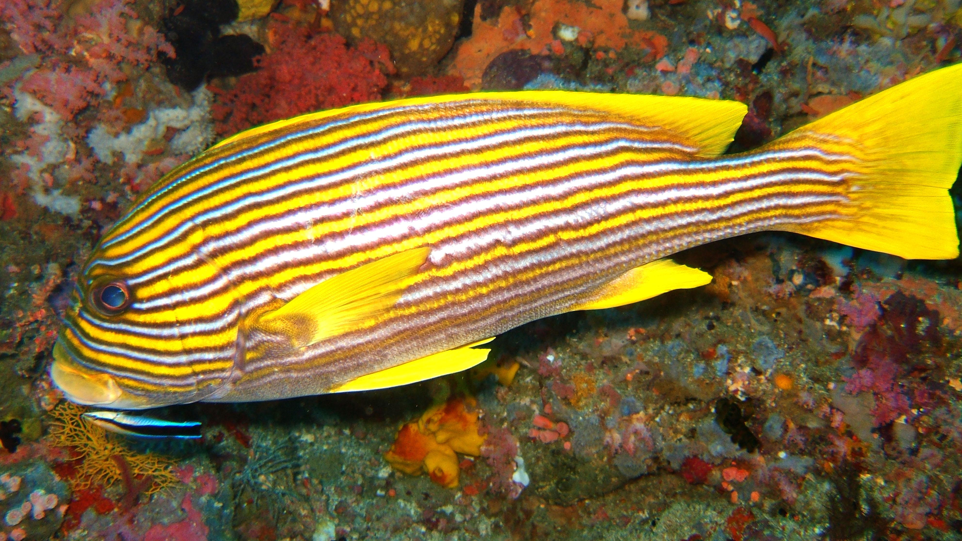 Dive 18 Philippines Mindoro Sabang Canyons Nov 2005 17