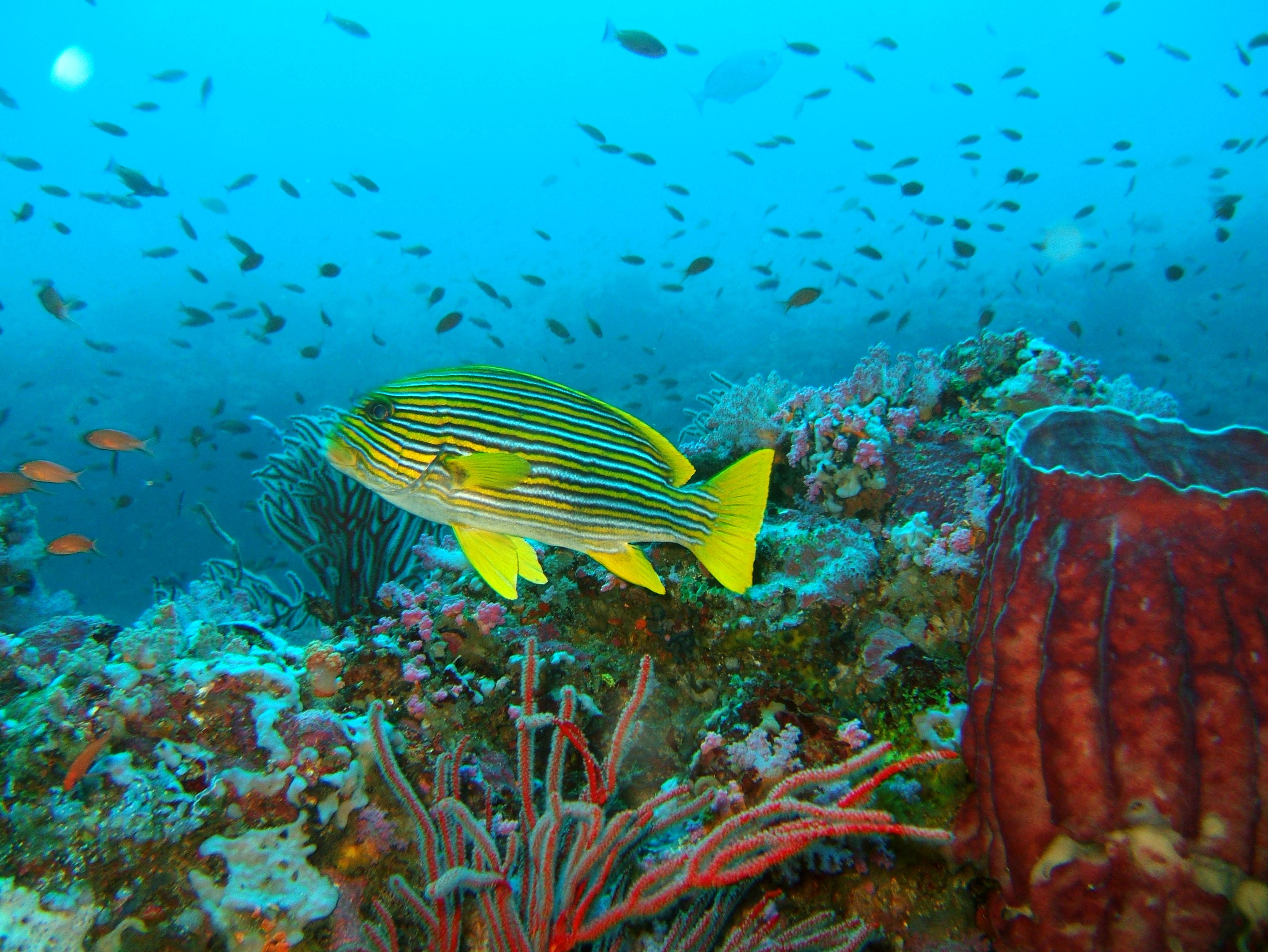 Dive 18 Philippines Mindoro Sabang Canyons Nov 2005 18