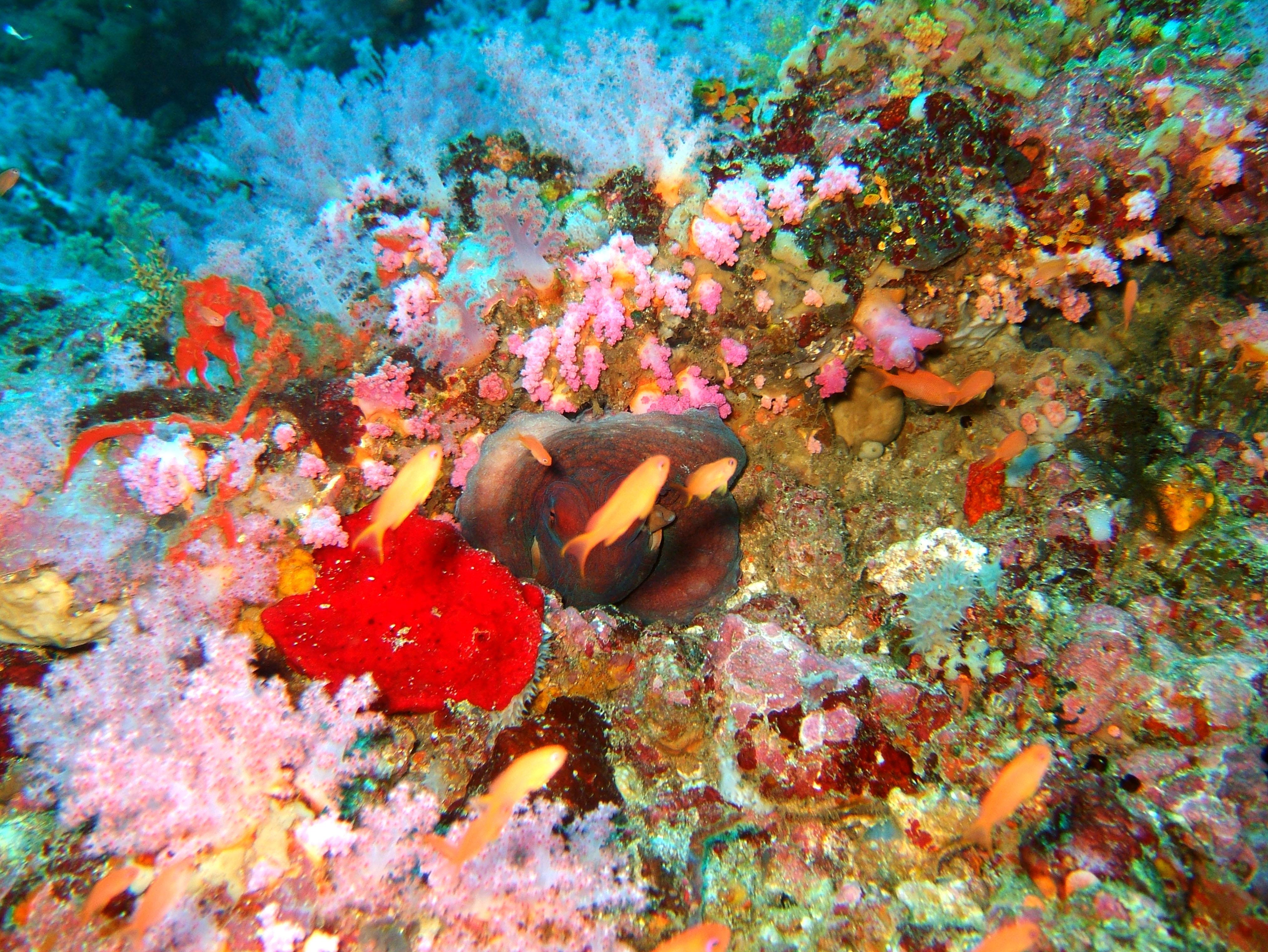 Dive 18 Philippines Mindoro Sabang Canyons Nov 2005 19