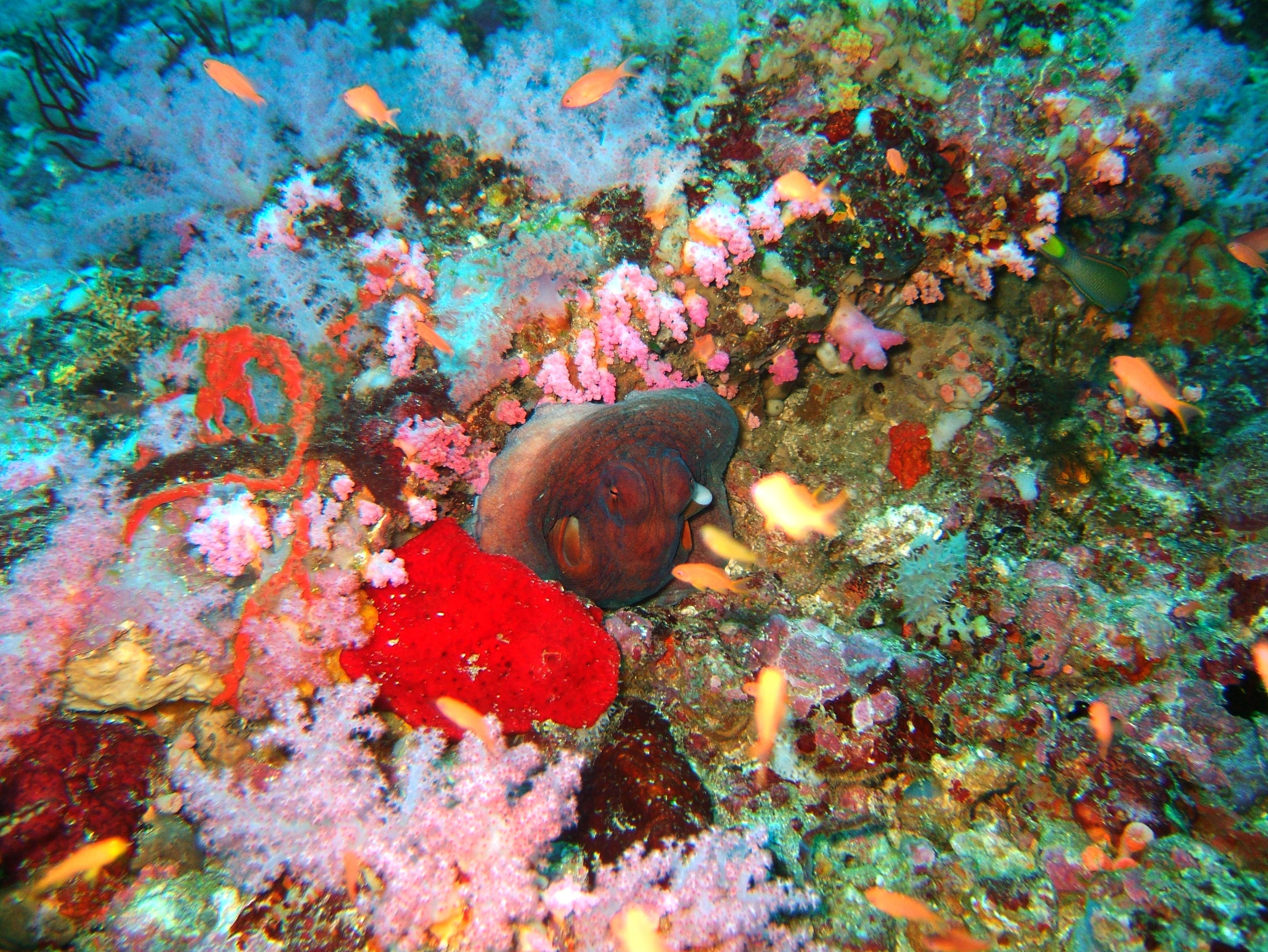 Dive 18 Philippines Mindoro Sabang Canyons Nov 2005 20