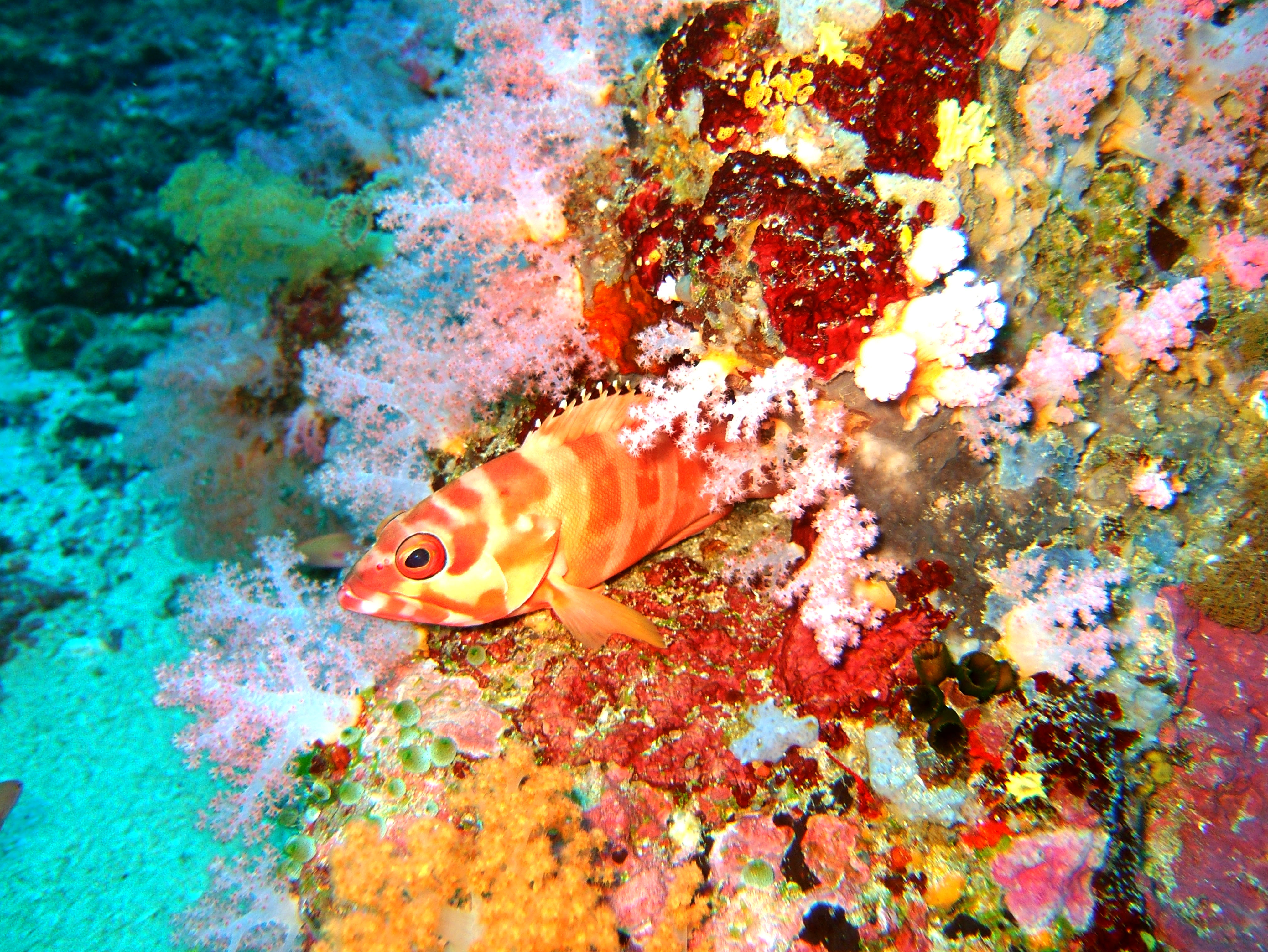 Dive 18 Philippines Mindoro Sabang Canyons Nov 2005 21