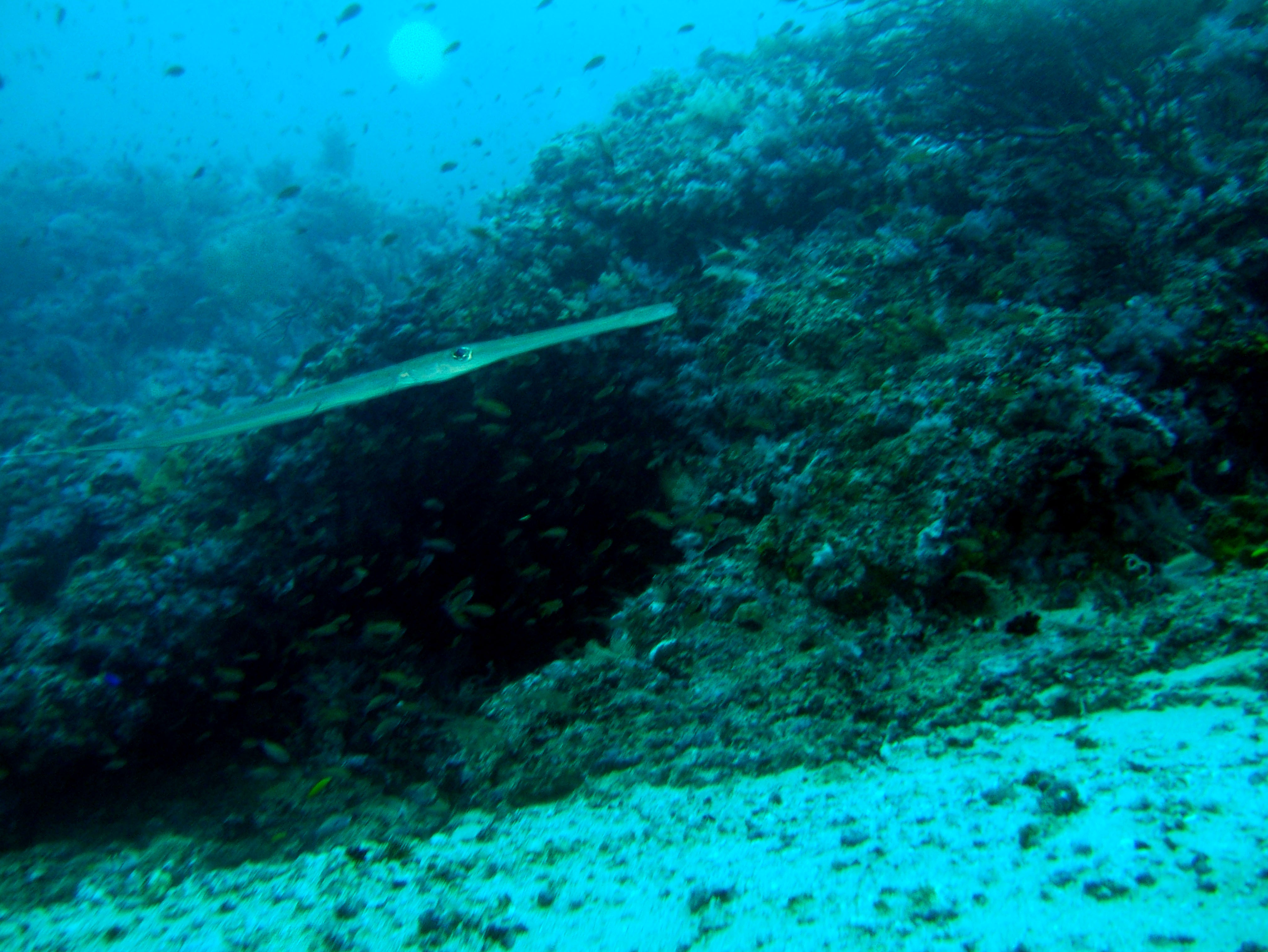 Dive 18 Philippines Mindoro Sabang Canyons Nov 2005 22