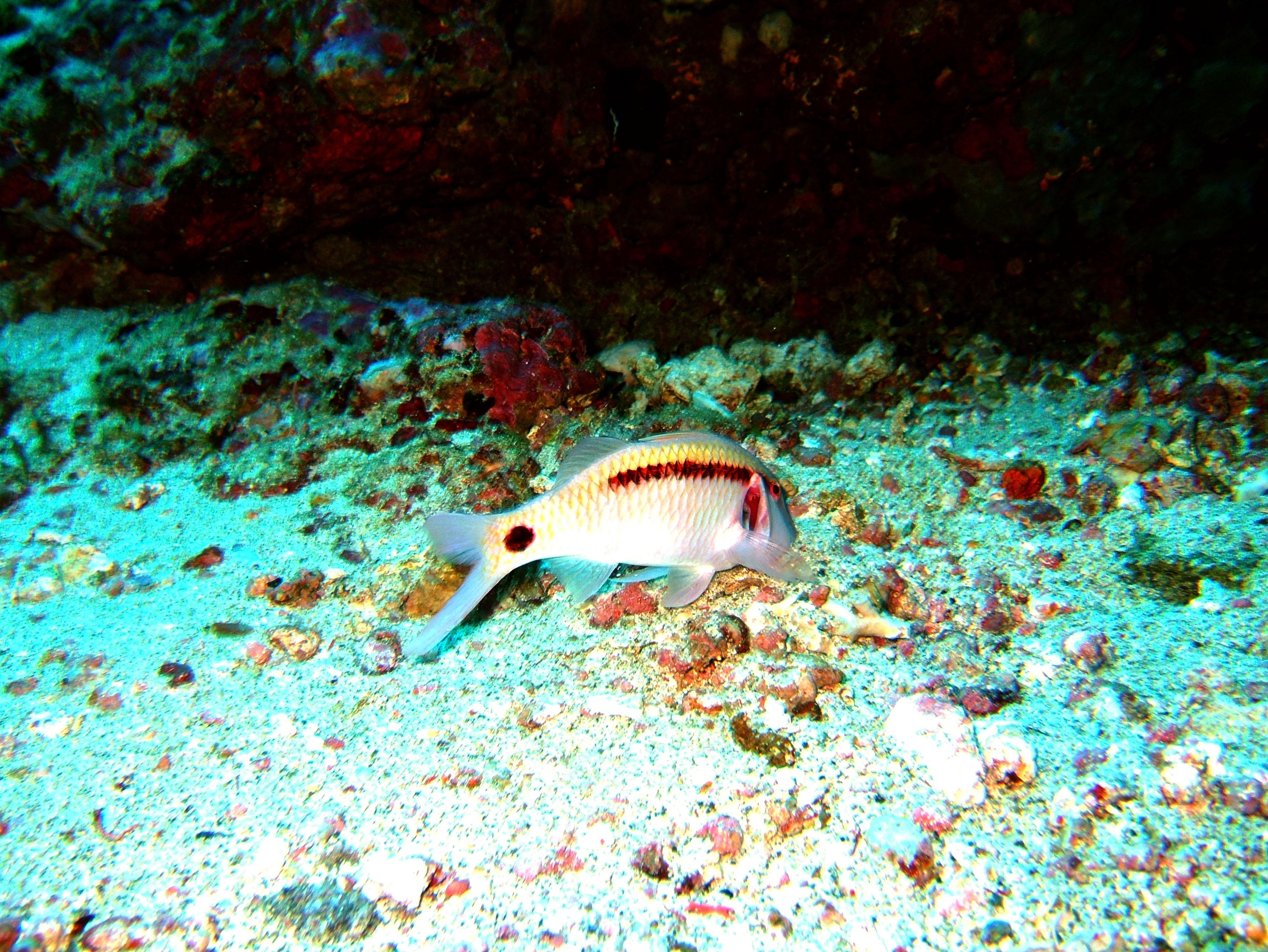 Dive 18 Philippines Mindoro Sabang Canyons Nov 2005 23