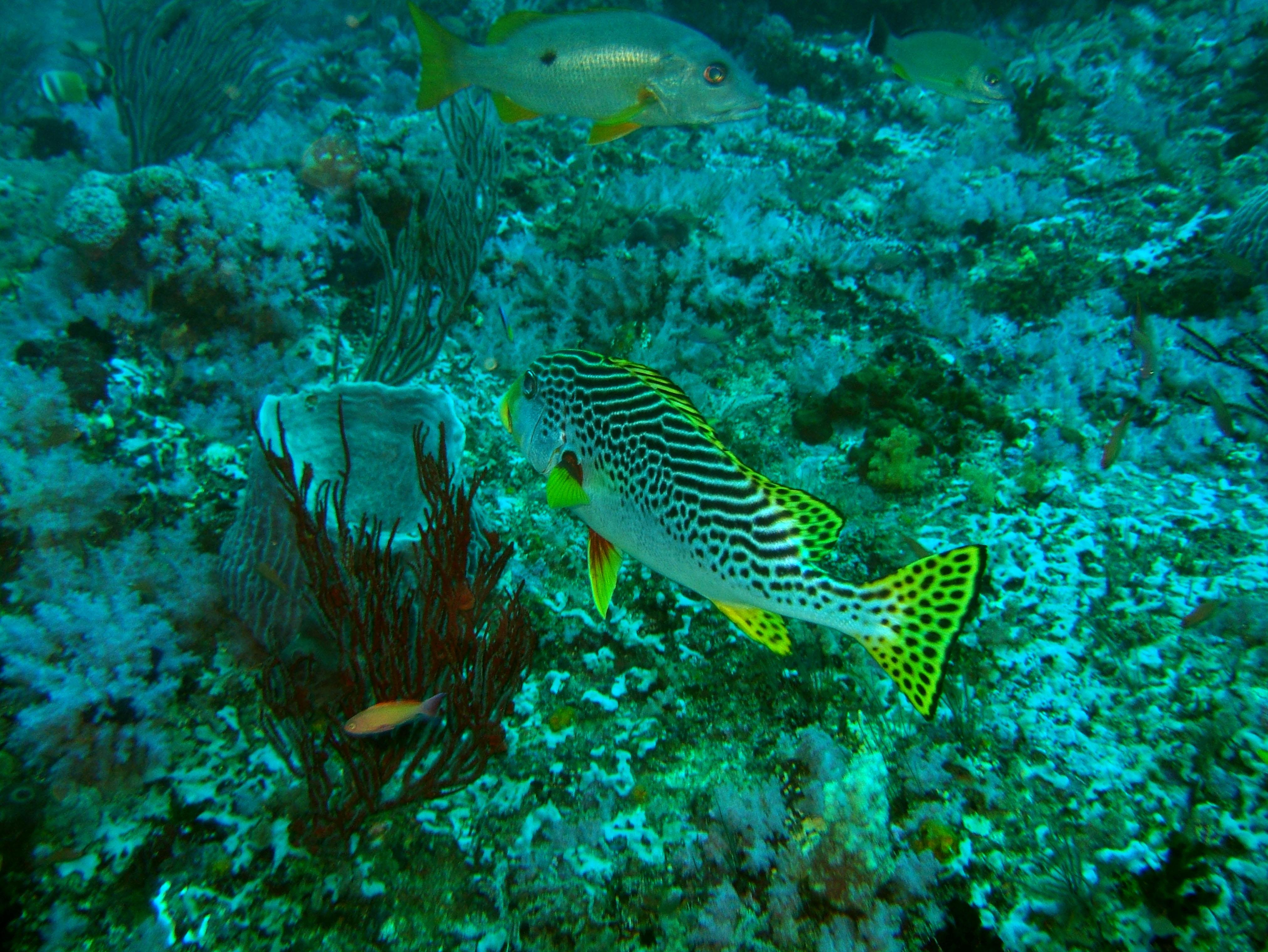 Dive 18 Philippines Mindoro Sabang Canyons Nov 2005 24