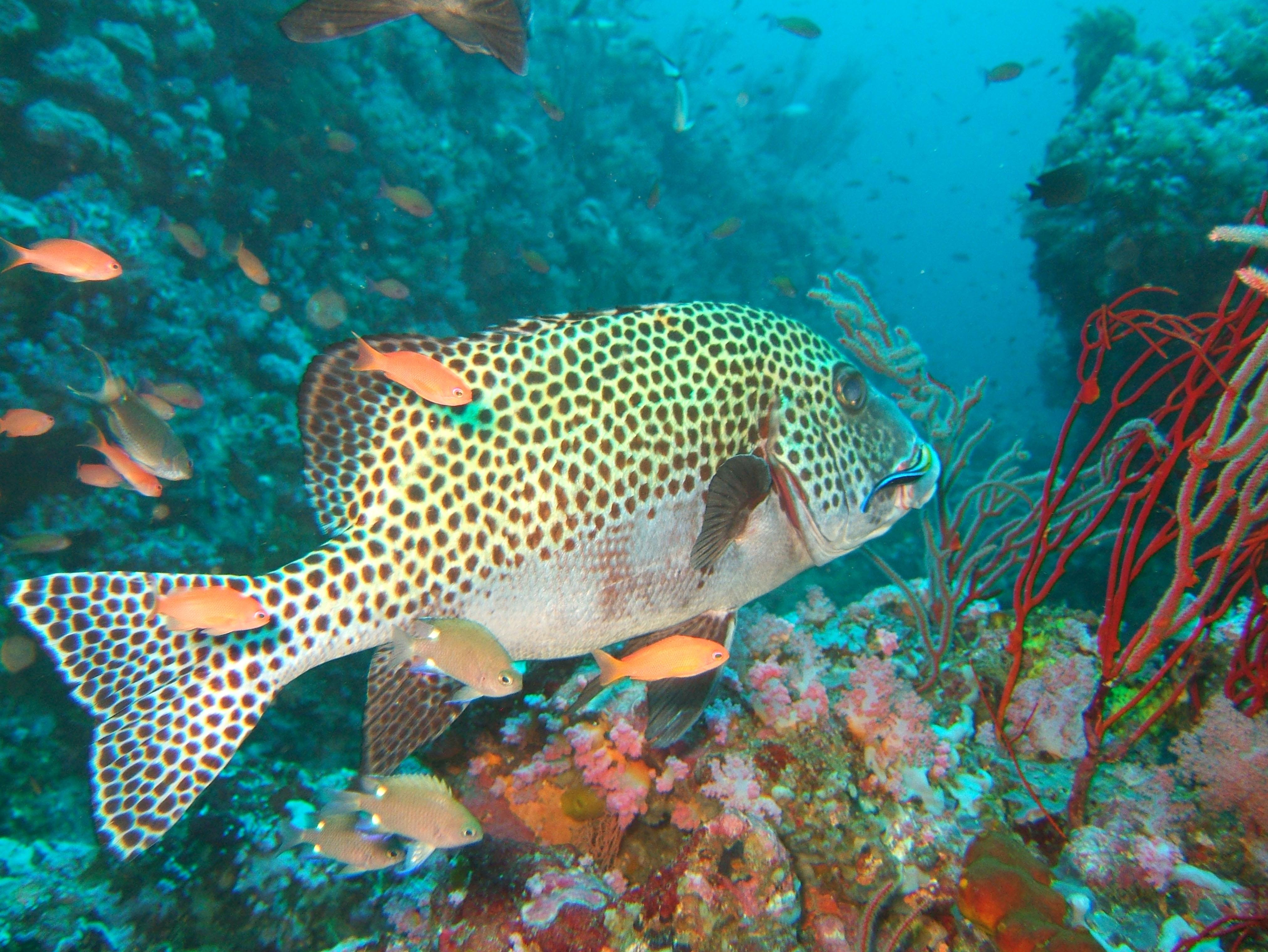 Dive 18 Philippines Mindoro Sabang Canyons Nov 2005 29