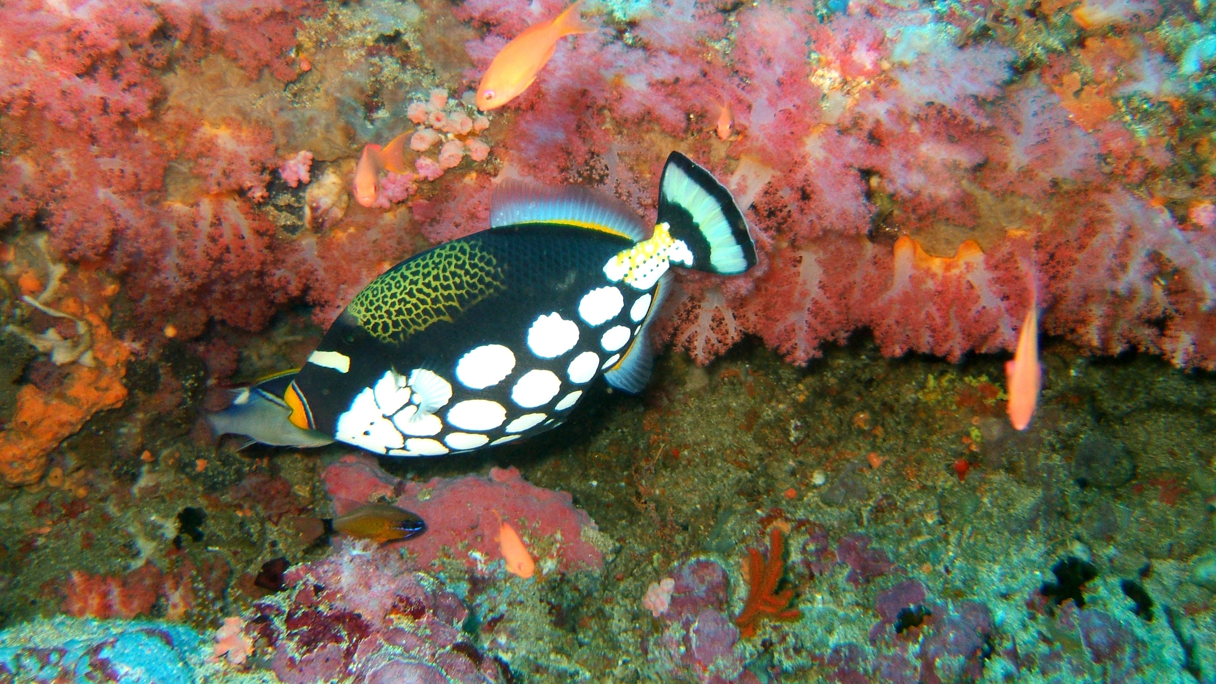 Dive 18 Philippines Mindoro Sabang Canyons Nov 2005 37