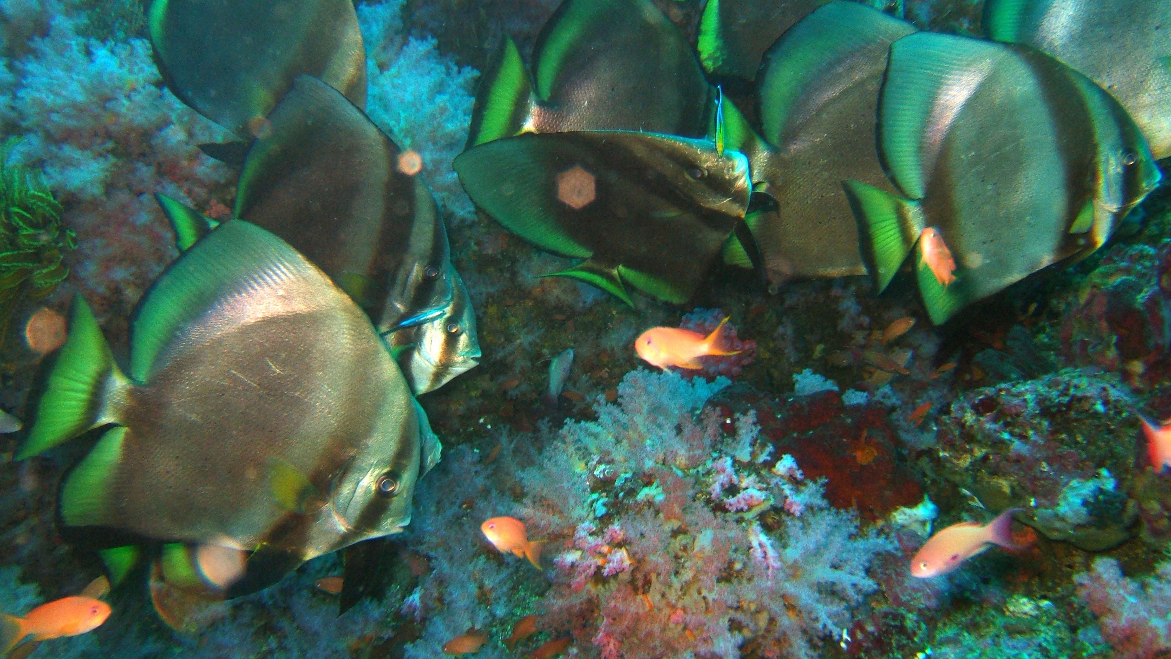 Dive 18 Philippines Mindoro Sabang Canyons Nov 2005 40
