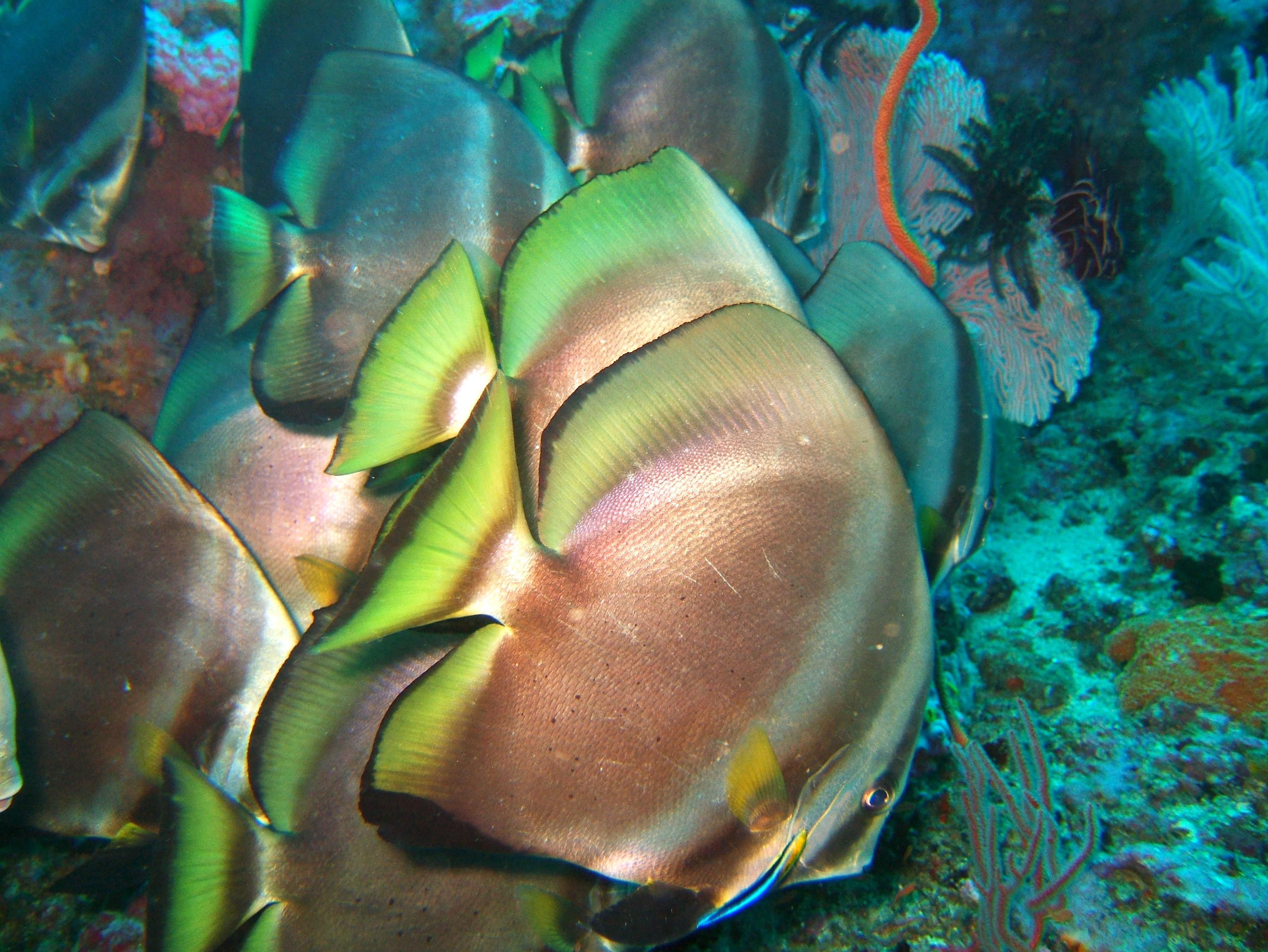 Dive 18 Philippines Mindoro Sabang Canyons Nov 2005 45