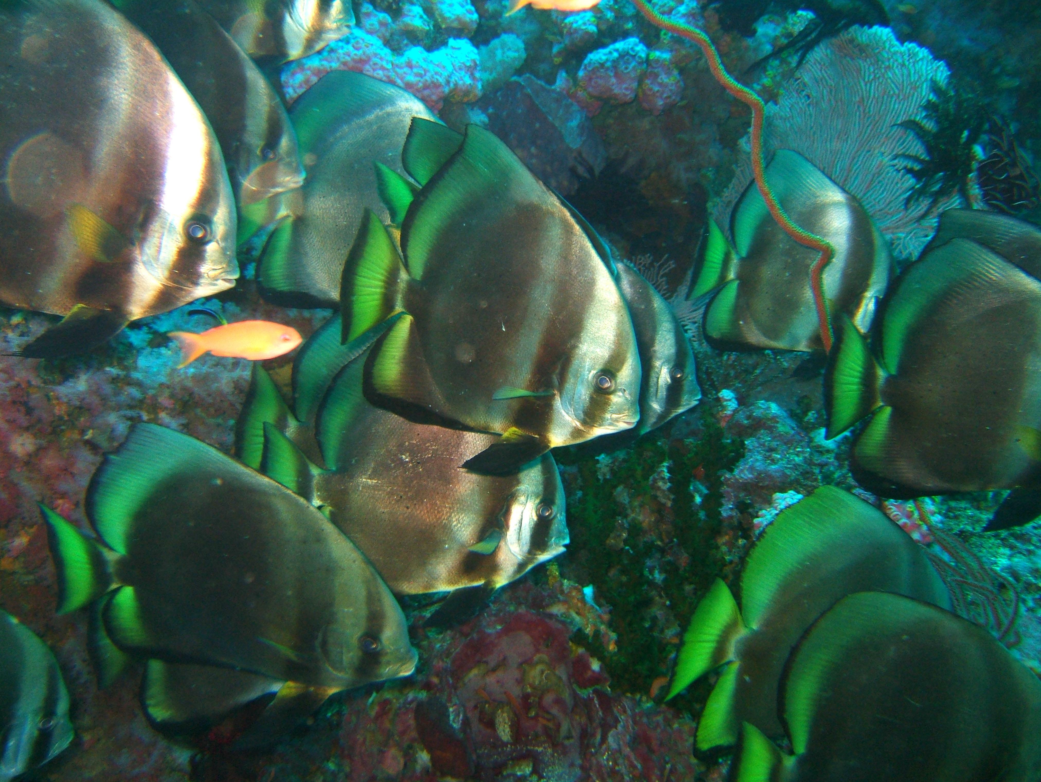 Dive 18 Philippines Mindoro Sabang Canyons Nov 2005 47