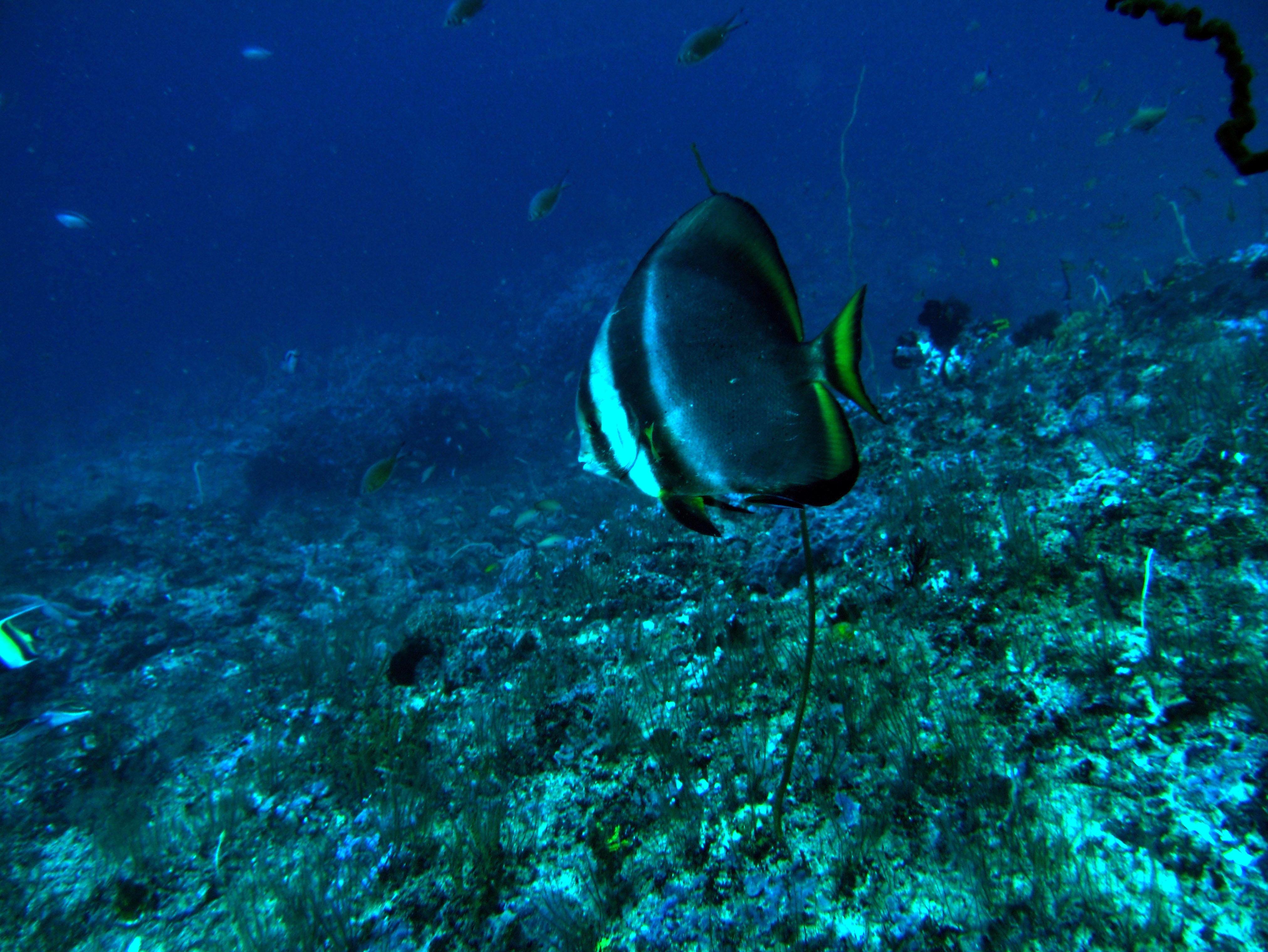 Dive 19 Philippines Mindoro Sabang Horsehead July 2005 01