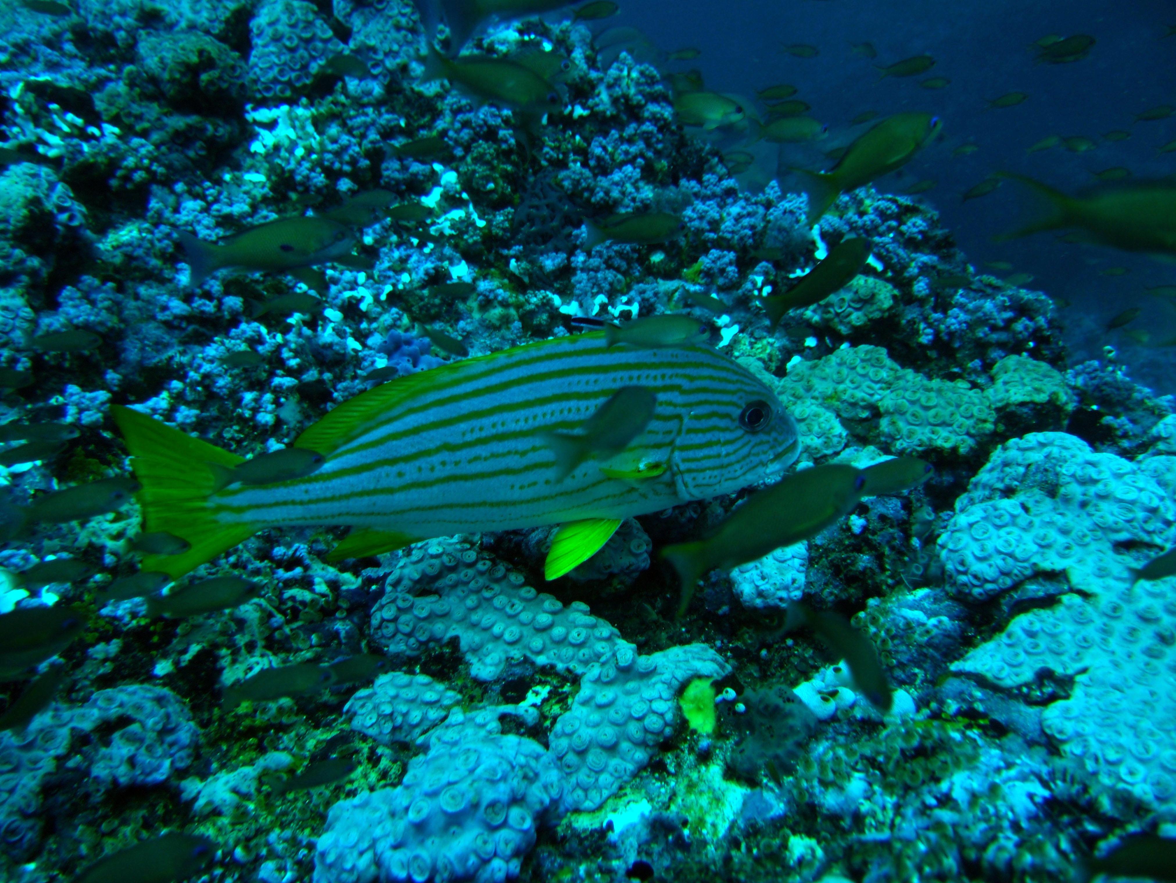 Dive 19 Philippines Mindoro Sabang Horsehead July 2005 05