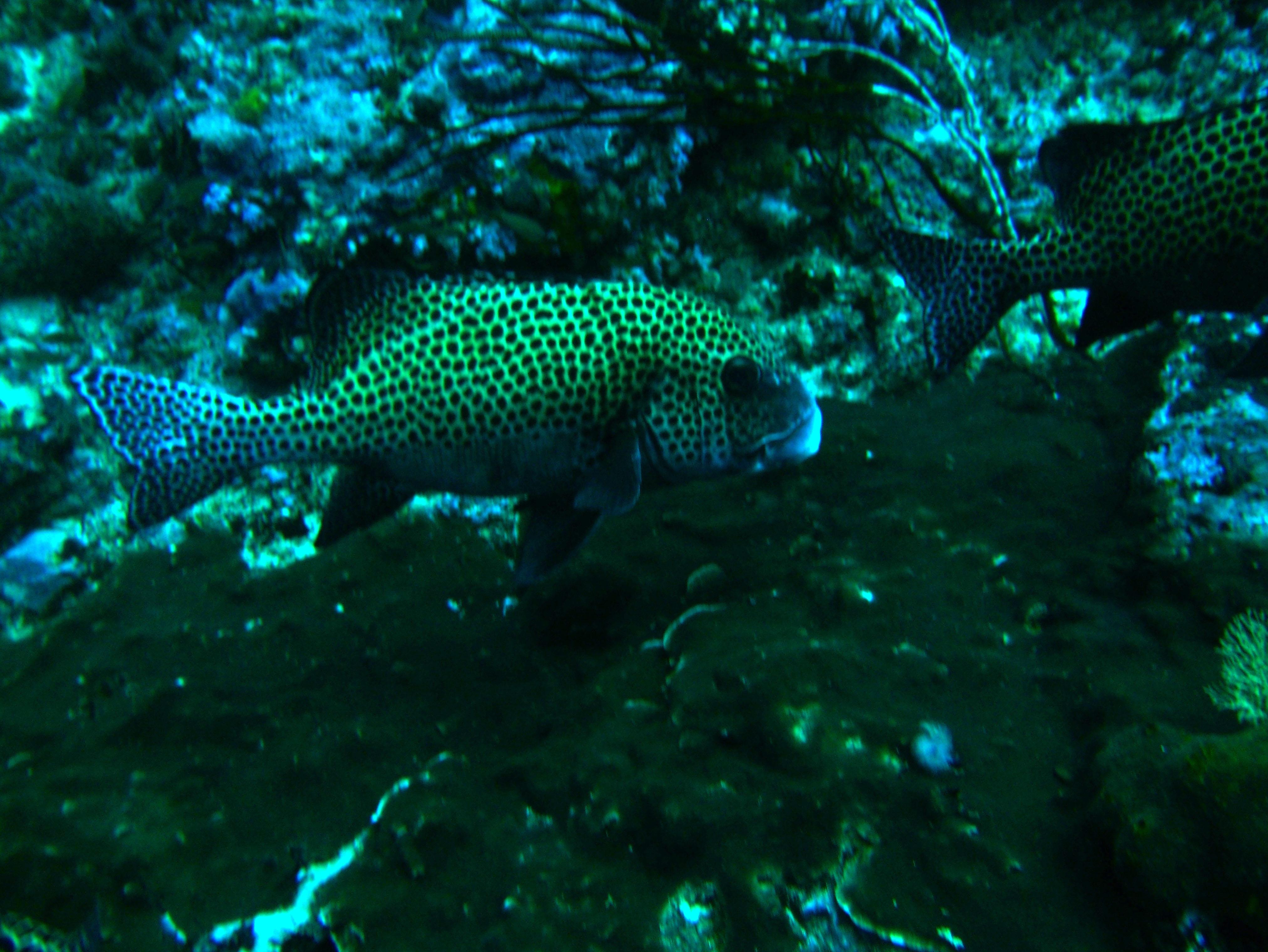 Dive 19 Philippines Mindoro Sabang Horsehead July 2005 11