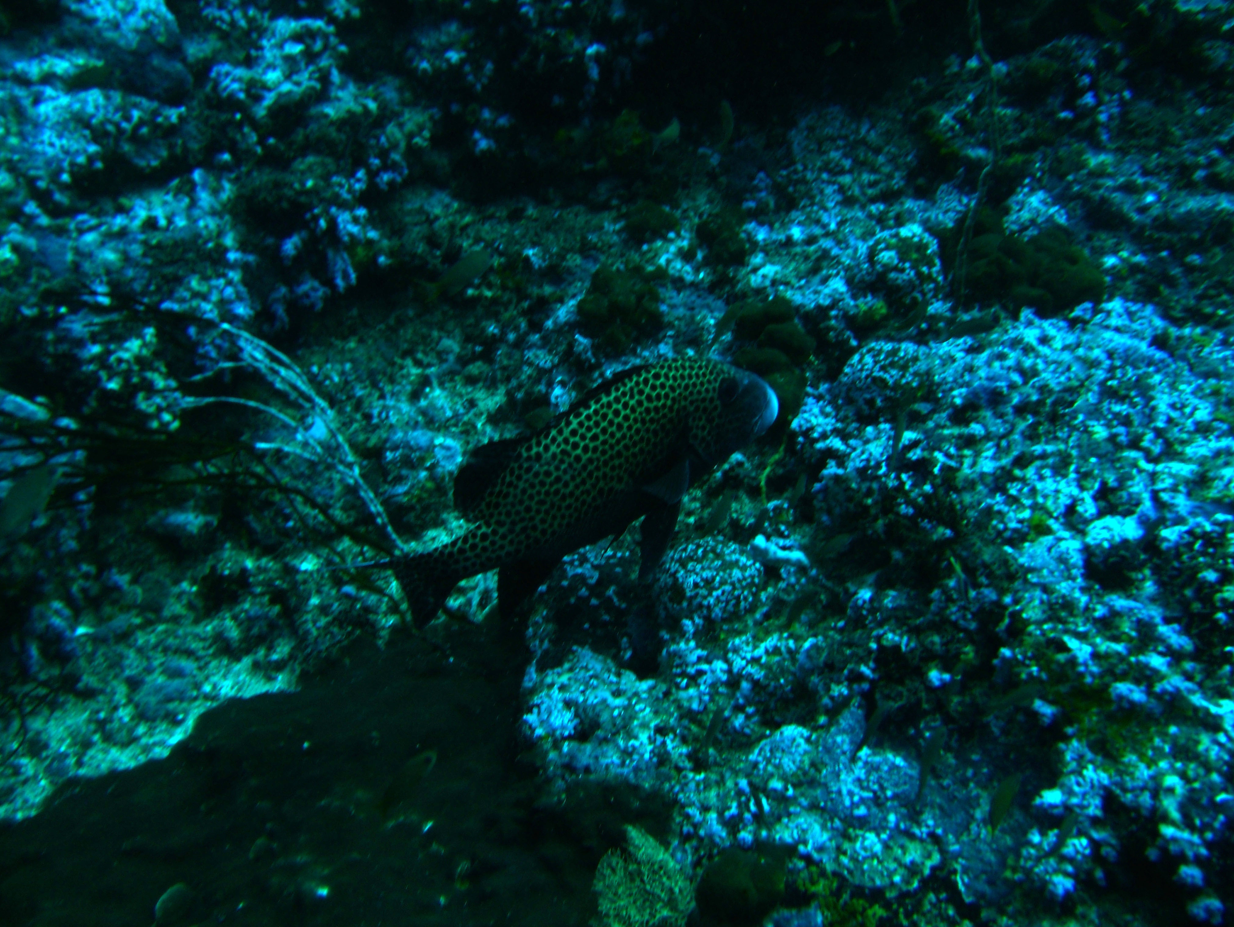Dive 19 Philippines Mindoro Sabang Horsehead July 2005 13