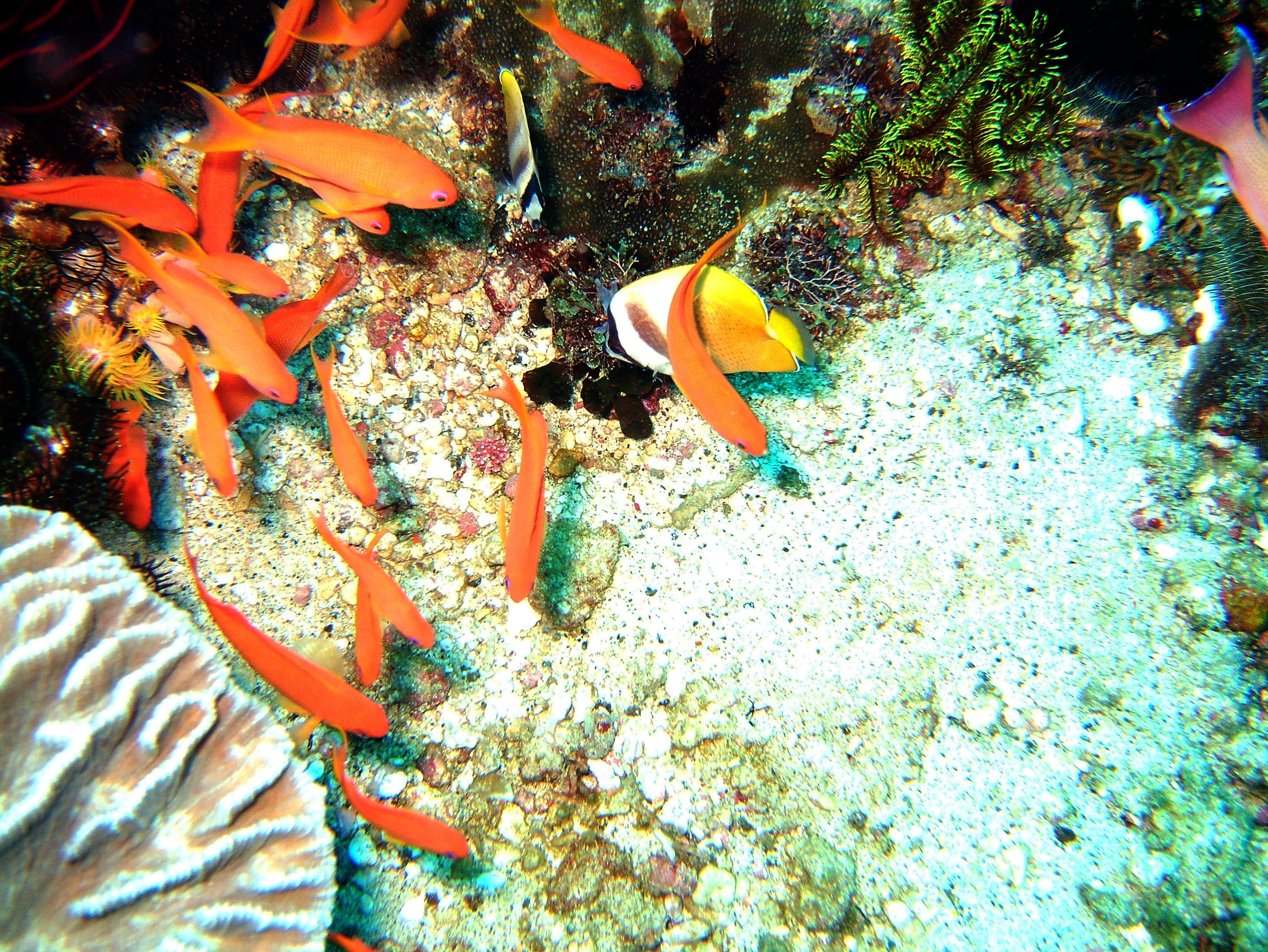 Dive 20 Philippines Mindoro Sabang Shark Cave Oct 2005 03