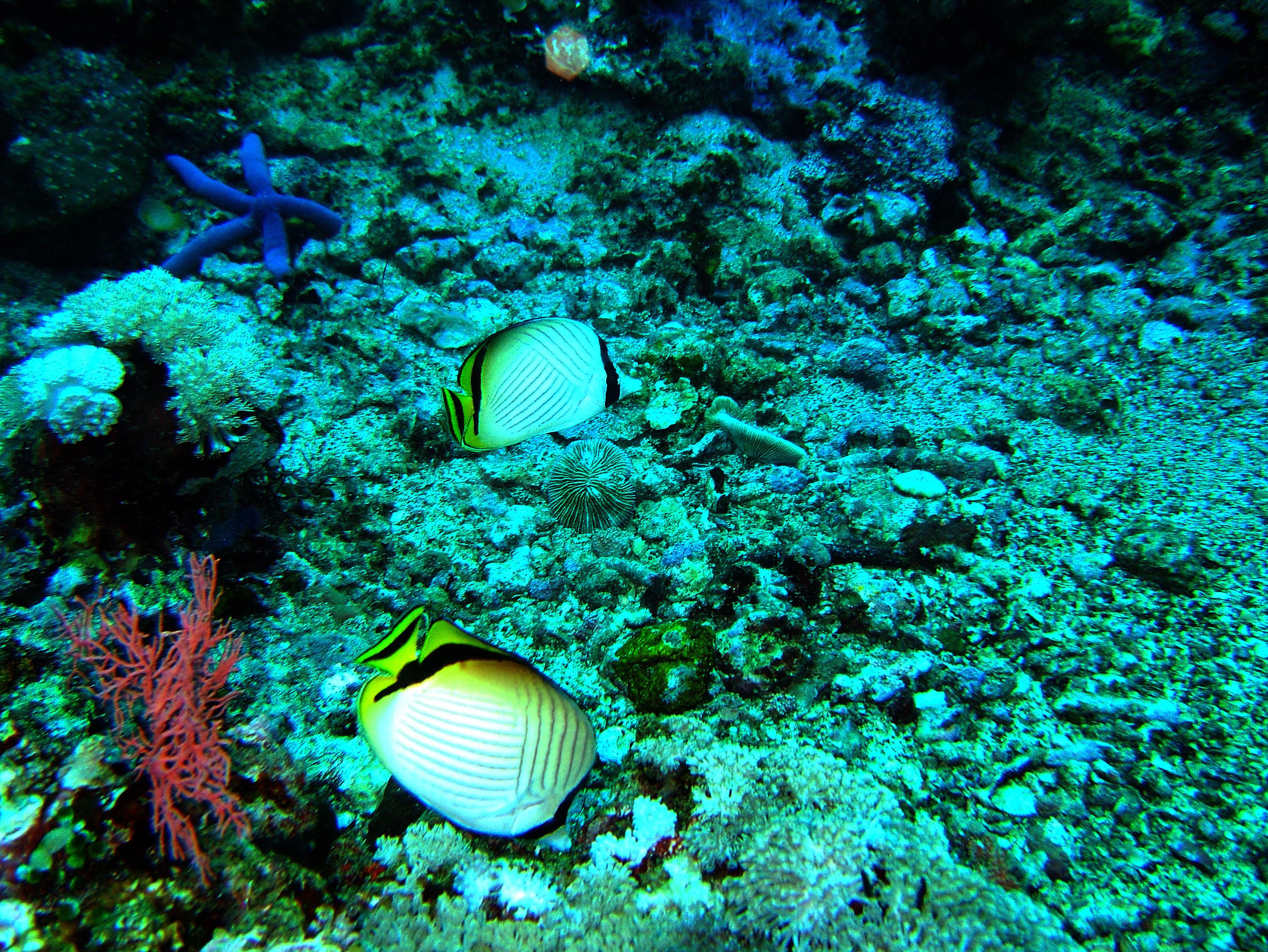 Dive 20 Philippines Mindoro Sabang Shark Cave Oct 2005 06