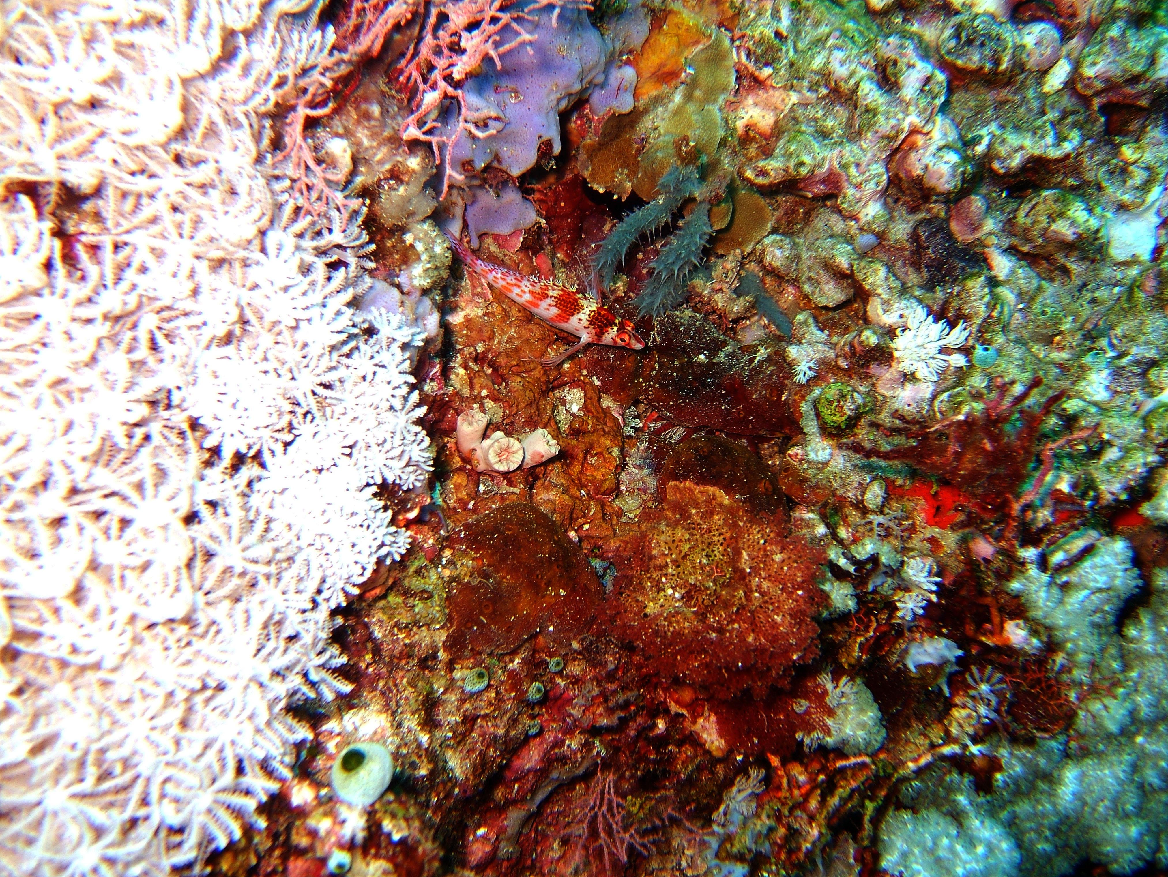Dive 20 Philippines Mindoro Sabang Shark Cave Oct 2005 07
