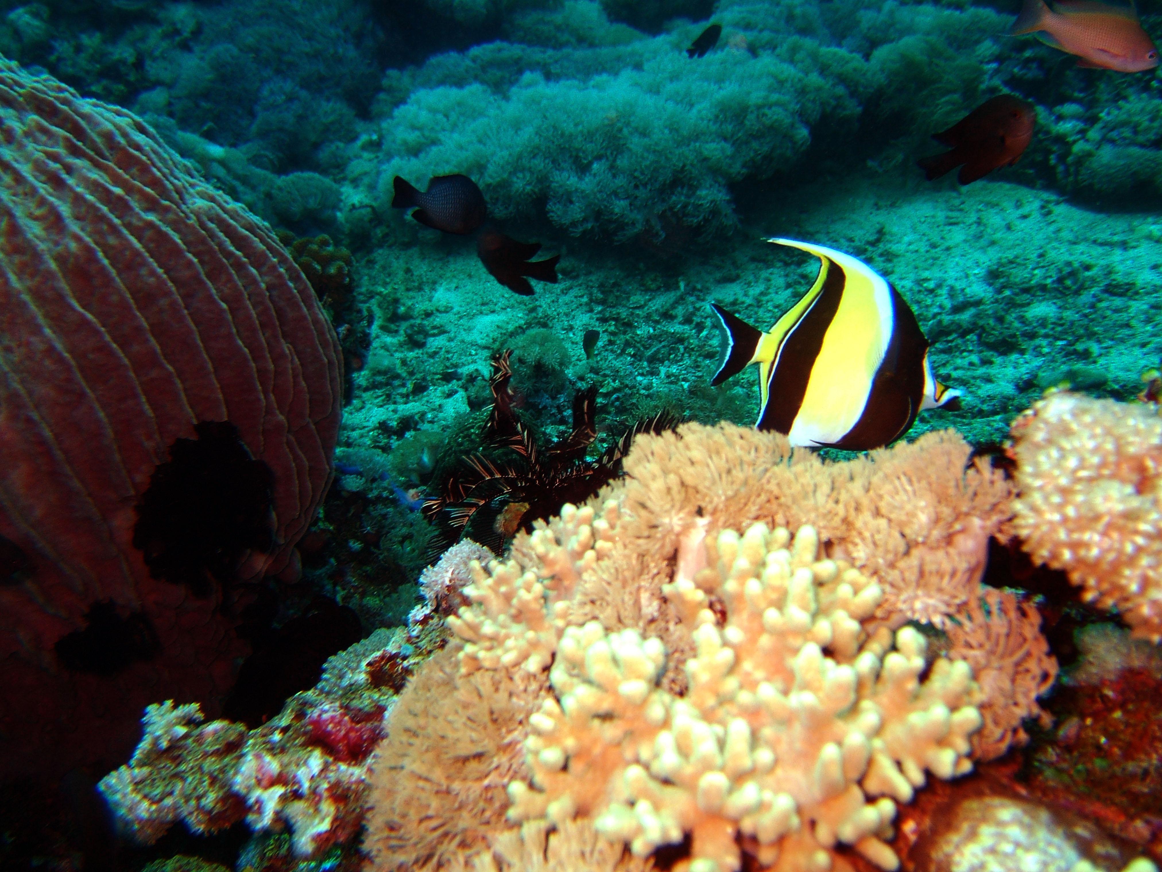 Dive 20 Philippines Mindoro Sabang Shark Cave Oct 2005 09