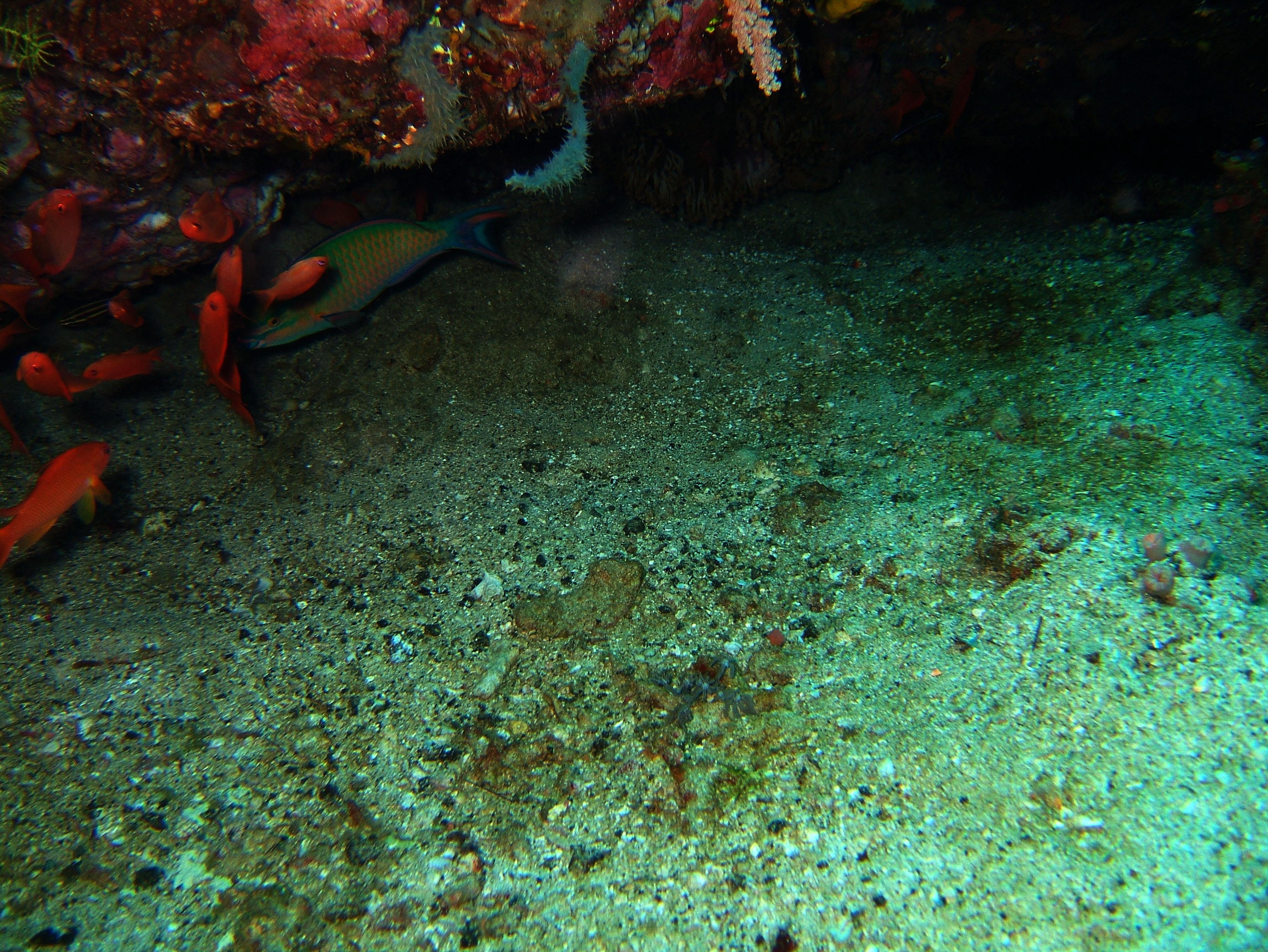 Dive 20 Philippines Mindoro Sabang Shark Cave Oct 2005 10