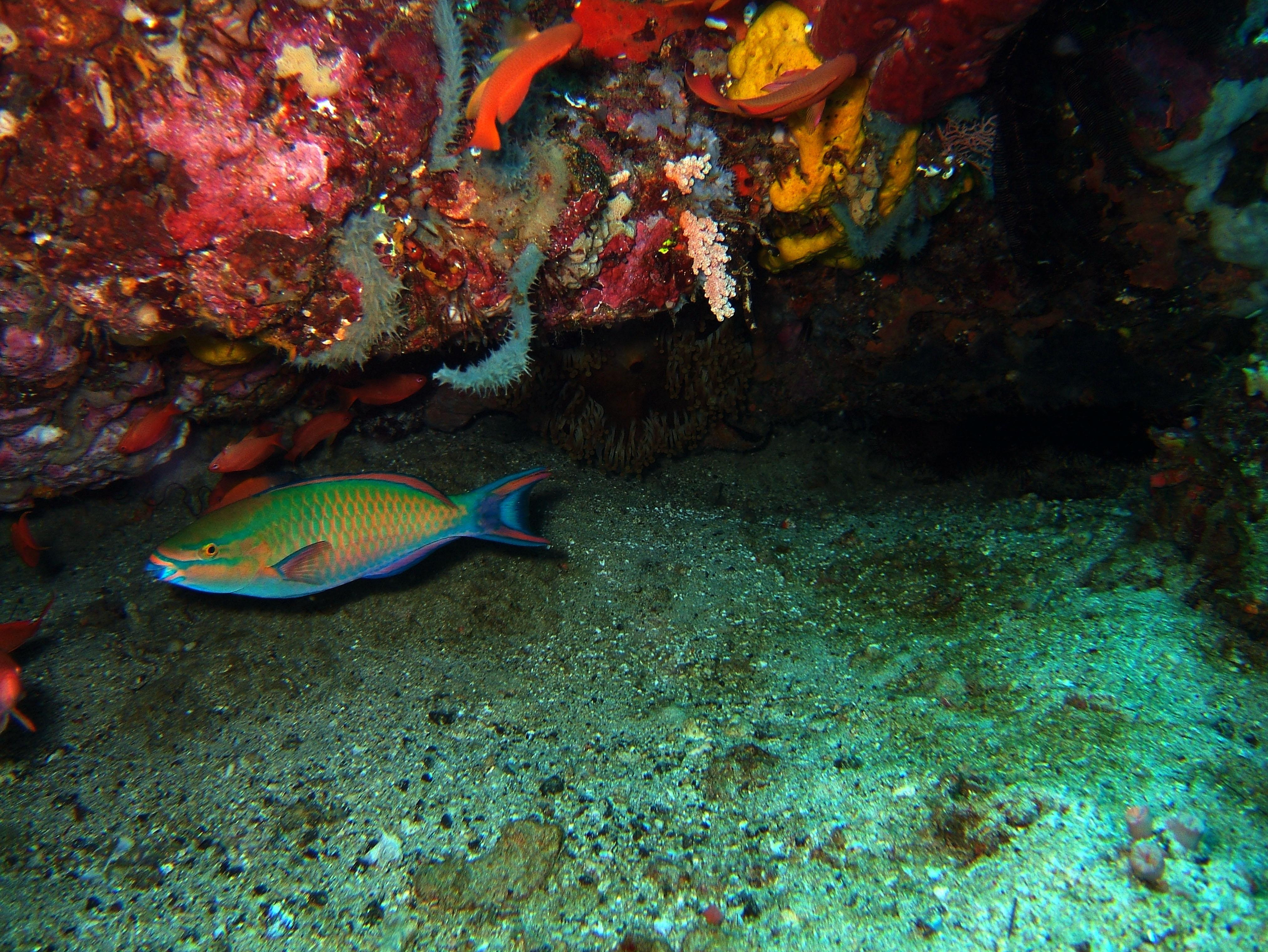 Dive 20 Philippines Mindoro Sabang Shark Cave Oct 2005 11