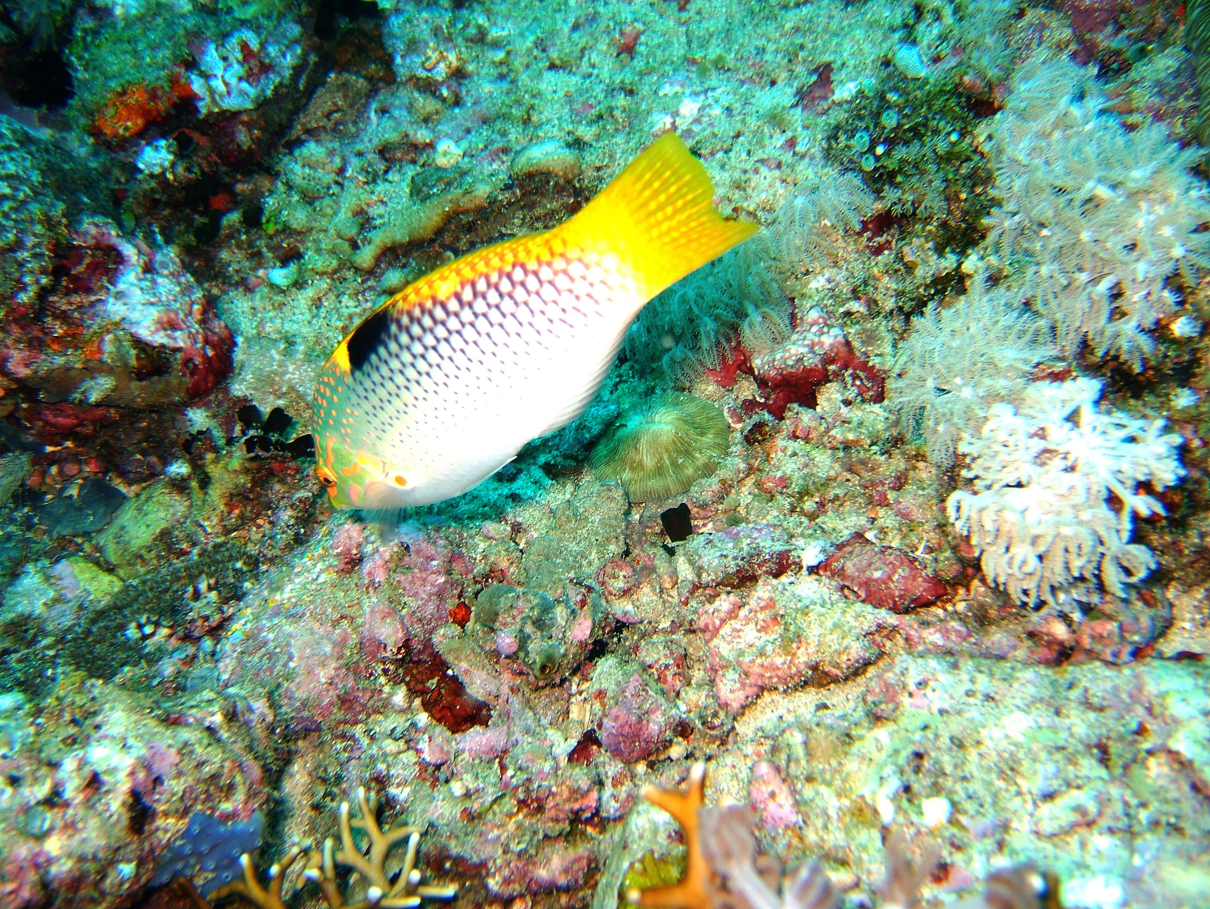 Dive 20 Philippines Mindoro Sabang Shark Cave Oct 2005 16