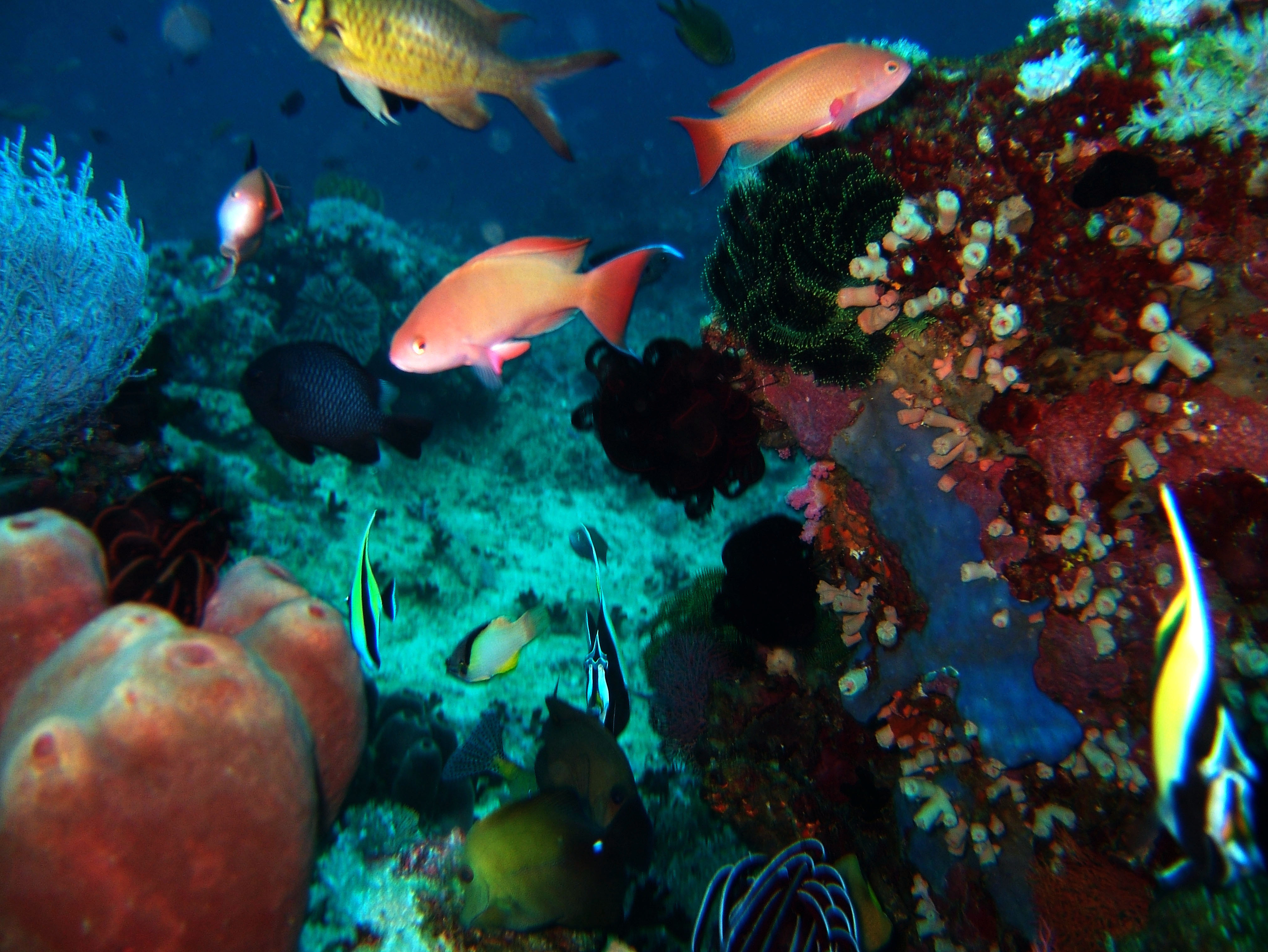 Dive 20 Philippines Mindoro Sabang Shark Cave Oct 2005 23