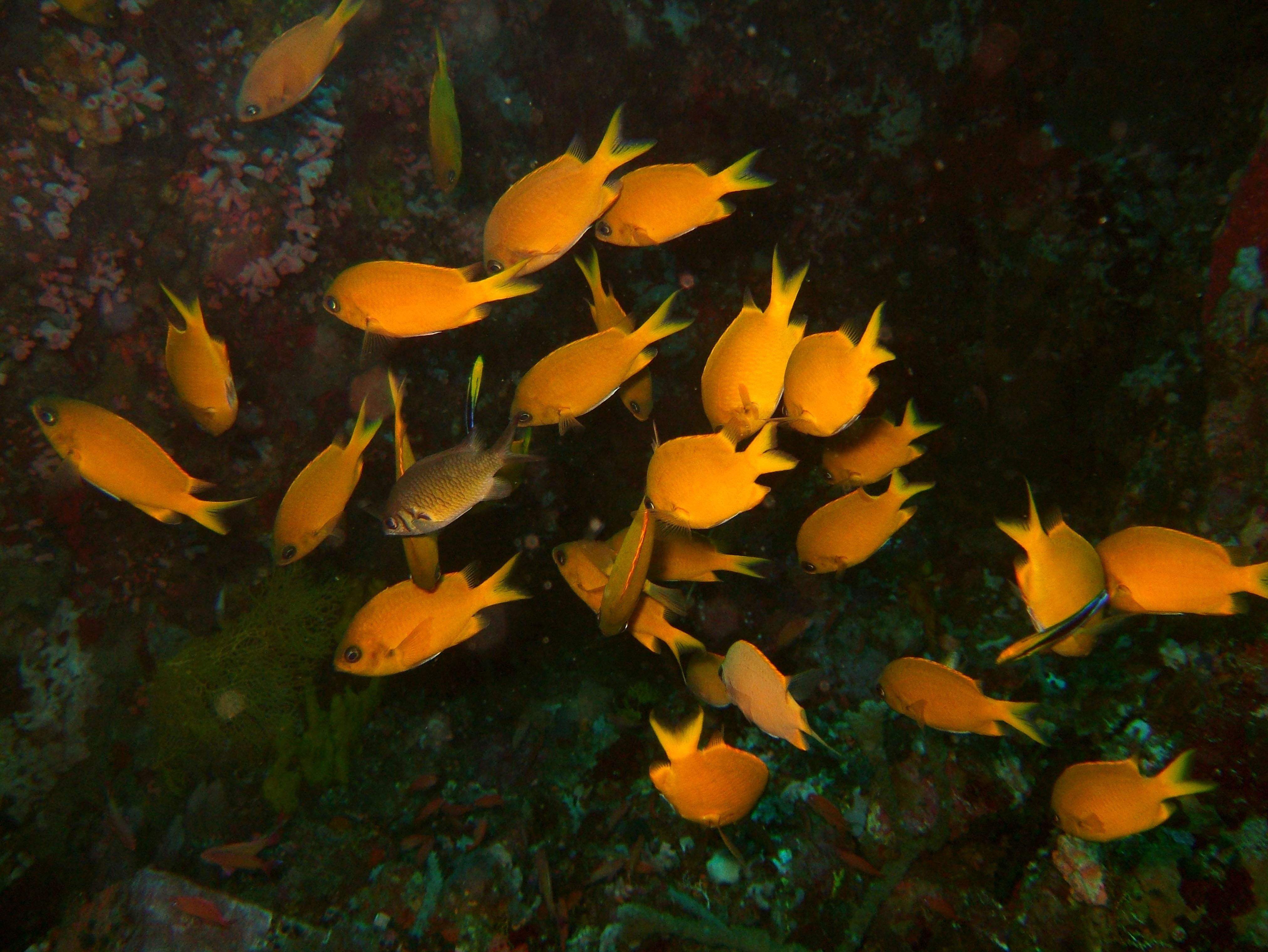 Dive 27 Philippines Mindoro Verdi Island Nov 2005 01