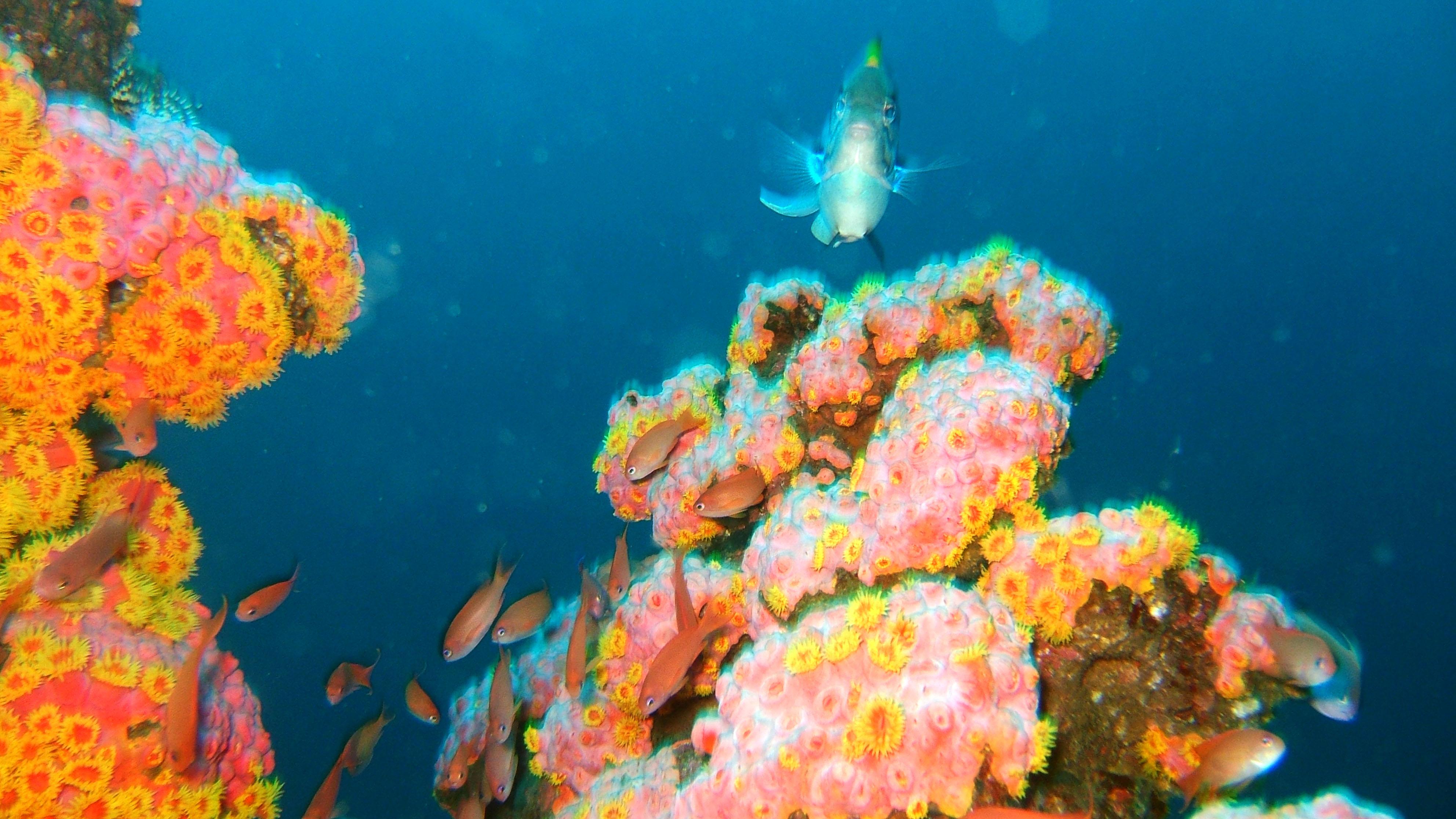 Dive 27 Philippines Mindoro Verdi Island Nov 2005 03