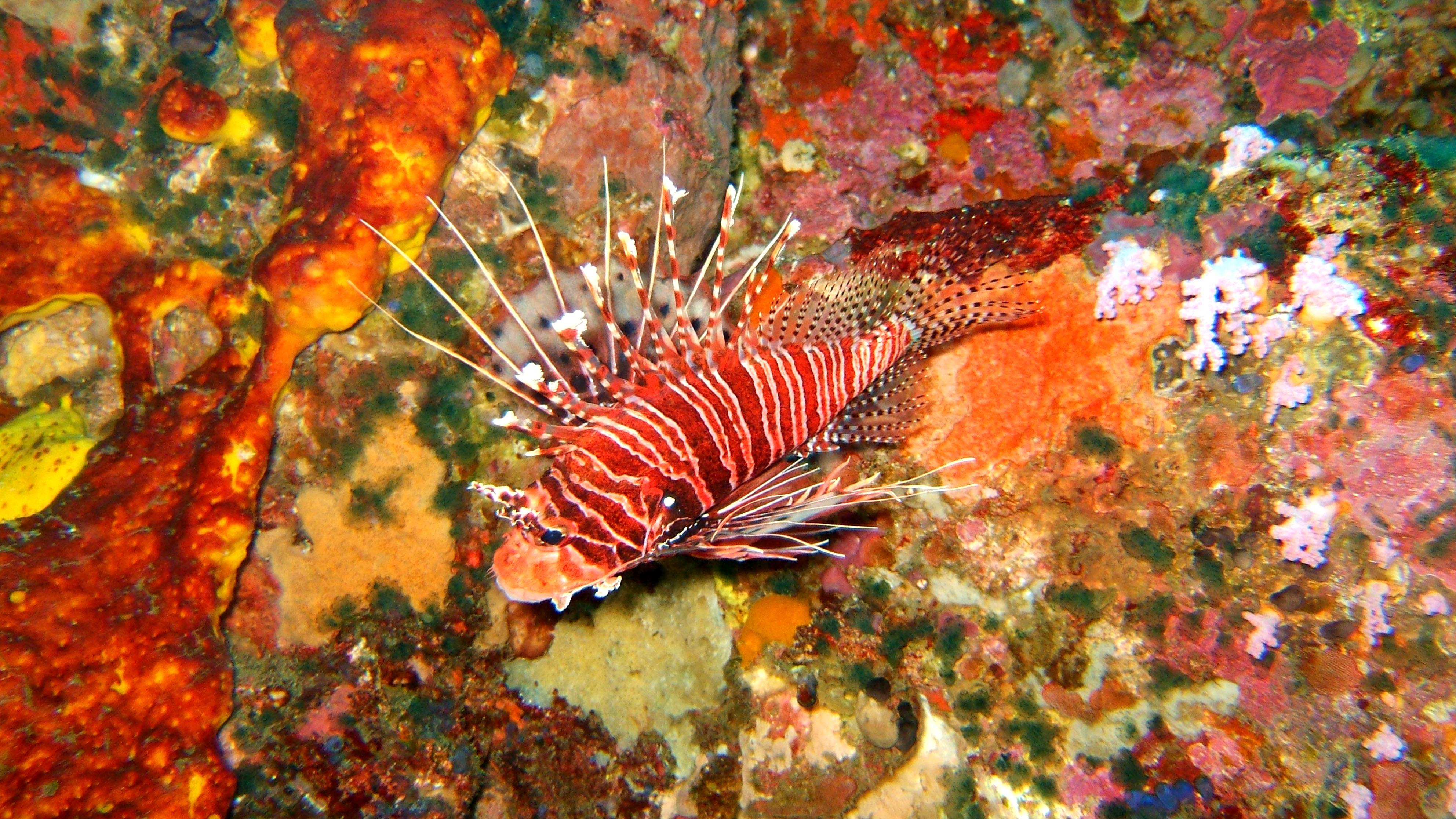 Dive 27 Philippines Mindoro Verdi Island Nov 2005 04