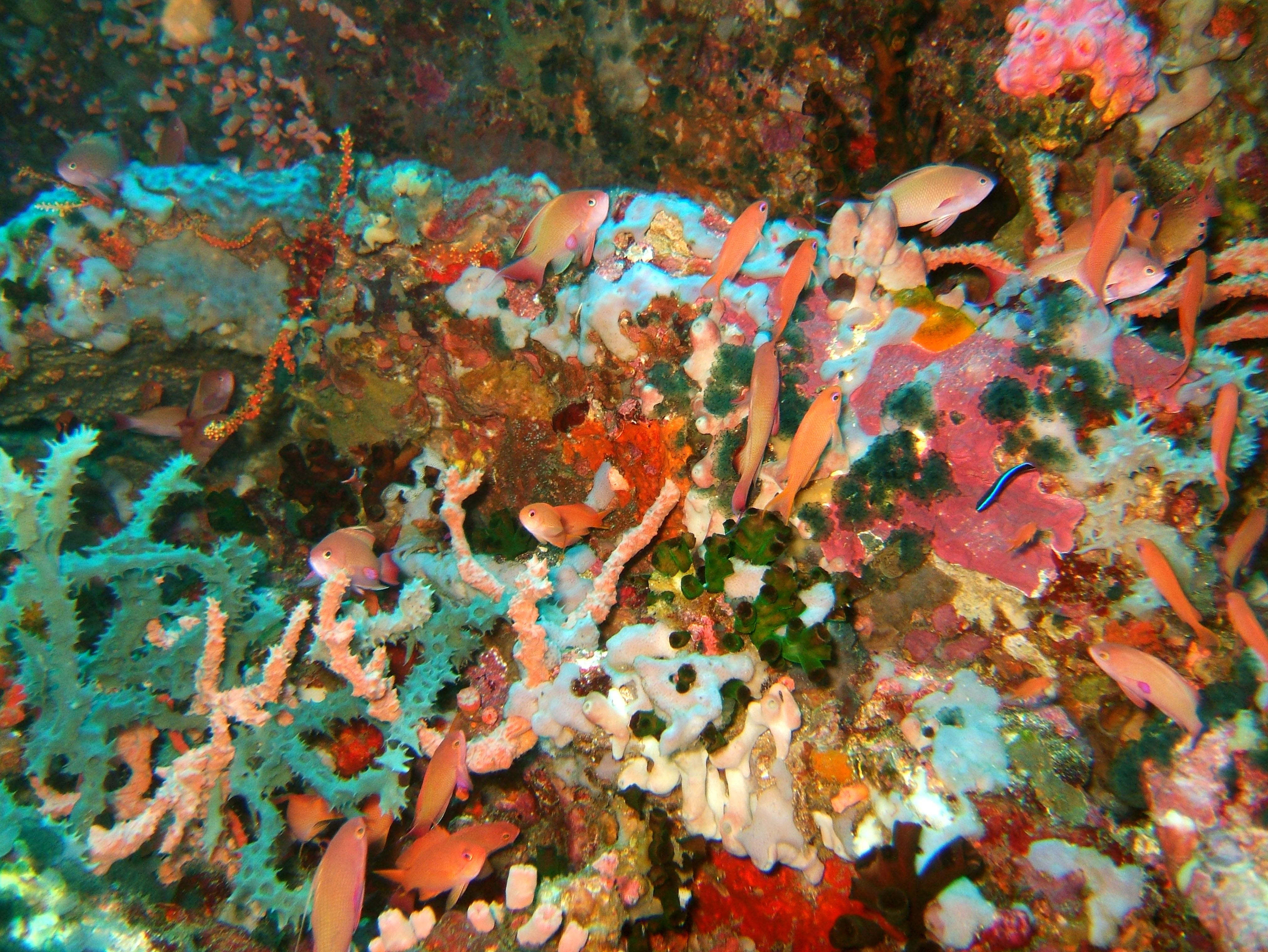 Dive 27 Philippines Mindoro Verdi Island Nov 2005 05