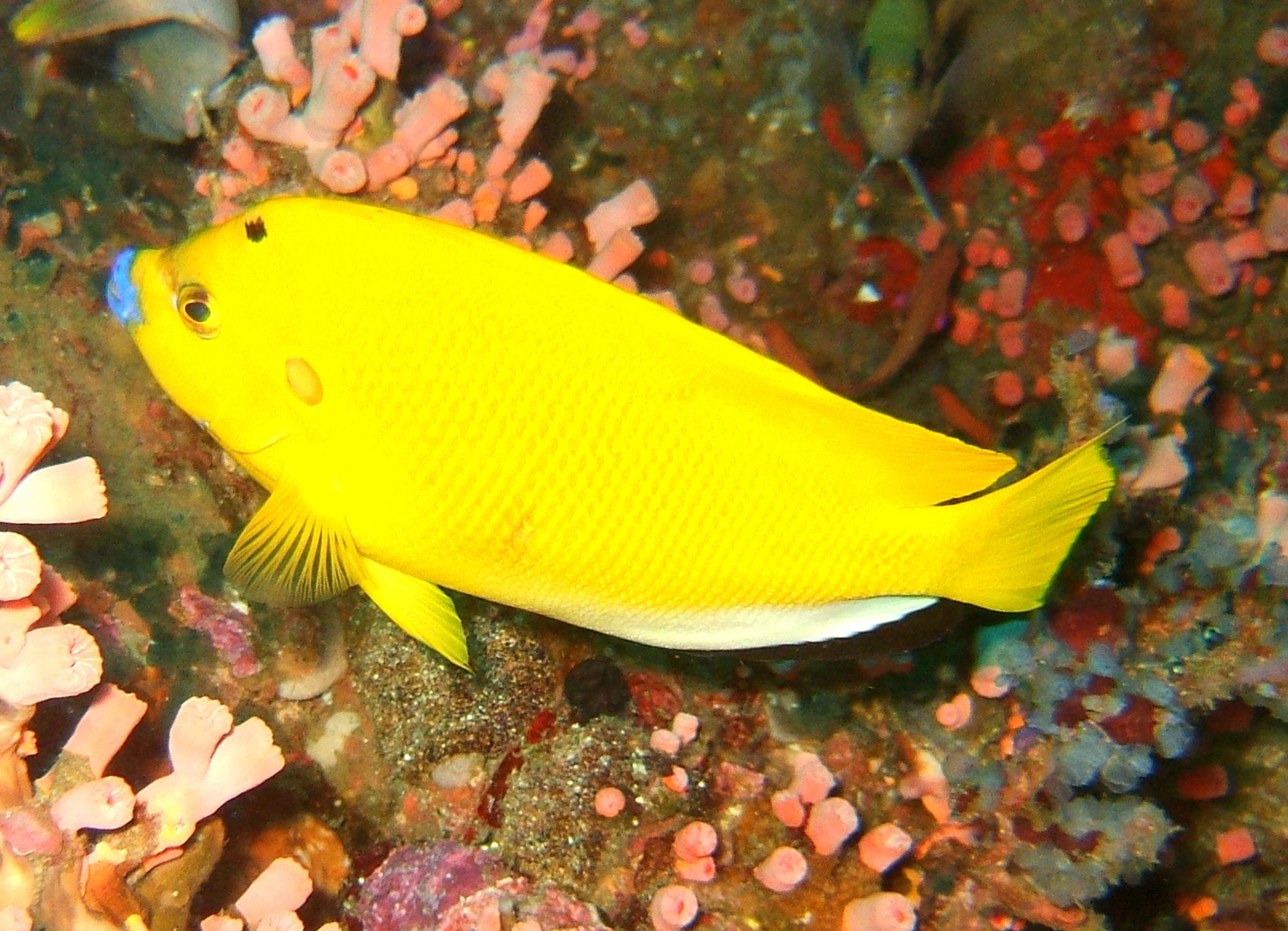 Dive 27 Philippines Mindoro Verdi Island Nov 2005 06