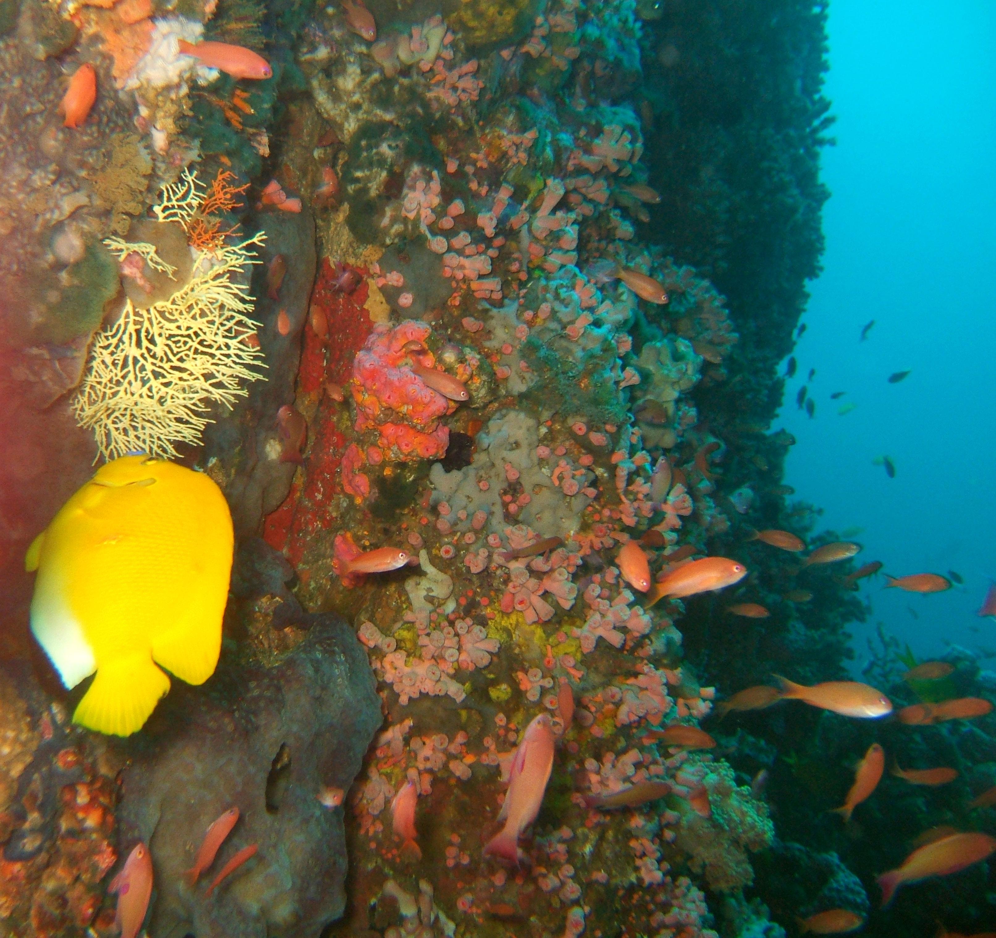 Dive 27 Philippines Mindoro Verdi Island Nov 2005 08