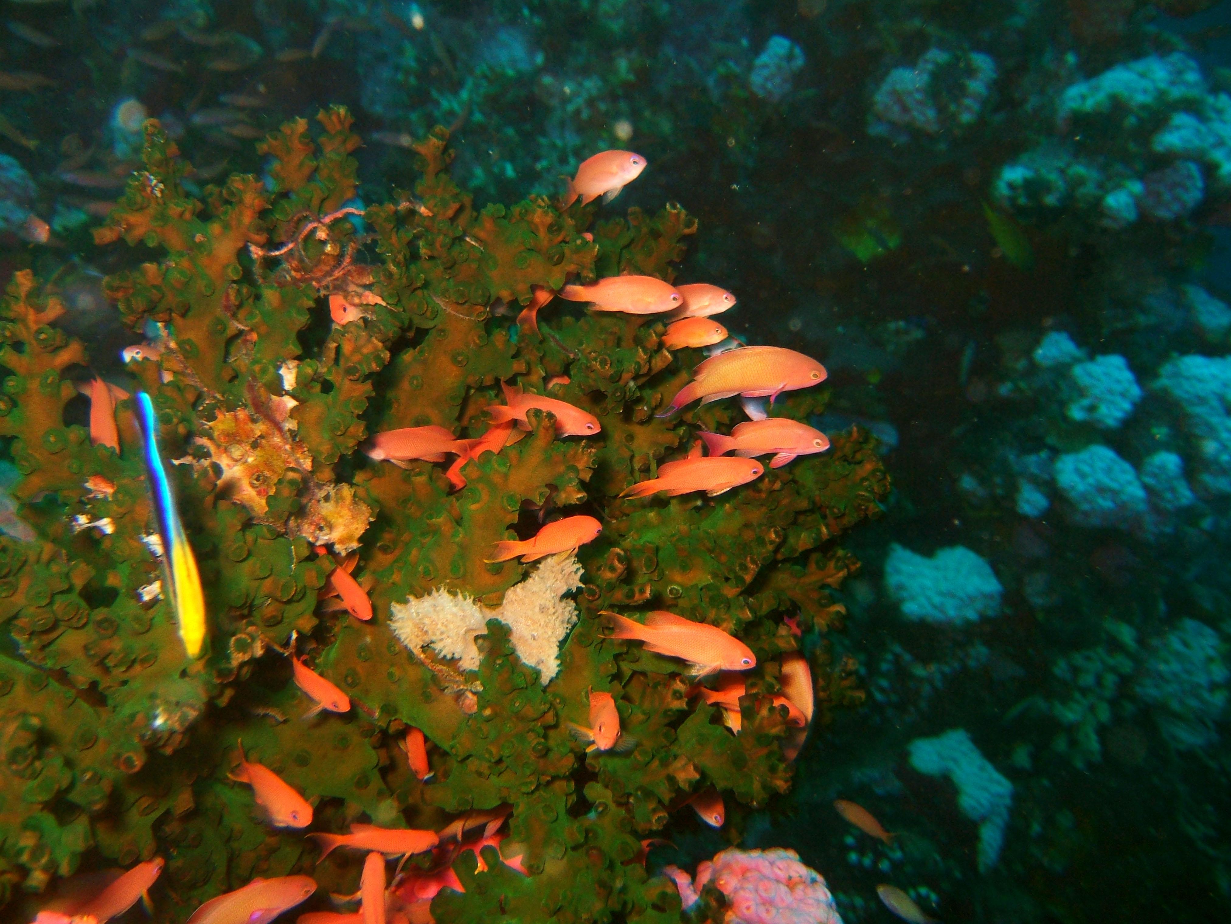 Dive 27 Philippines Mindoro Verdi Island Nov 2005 11