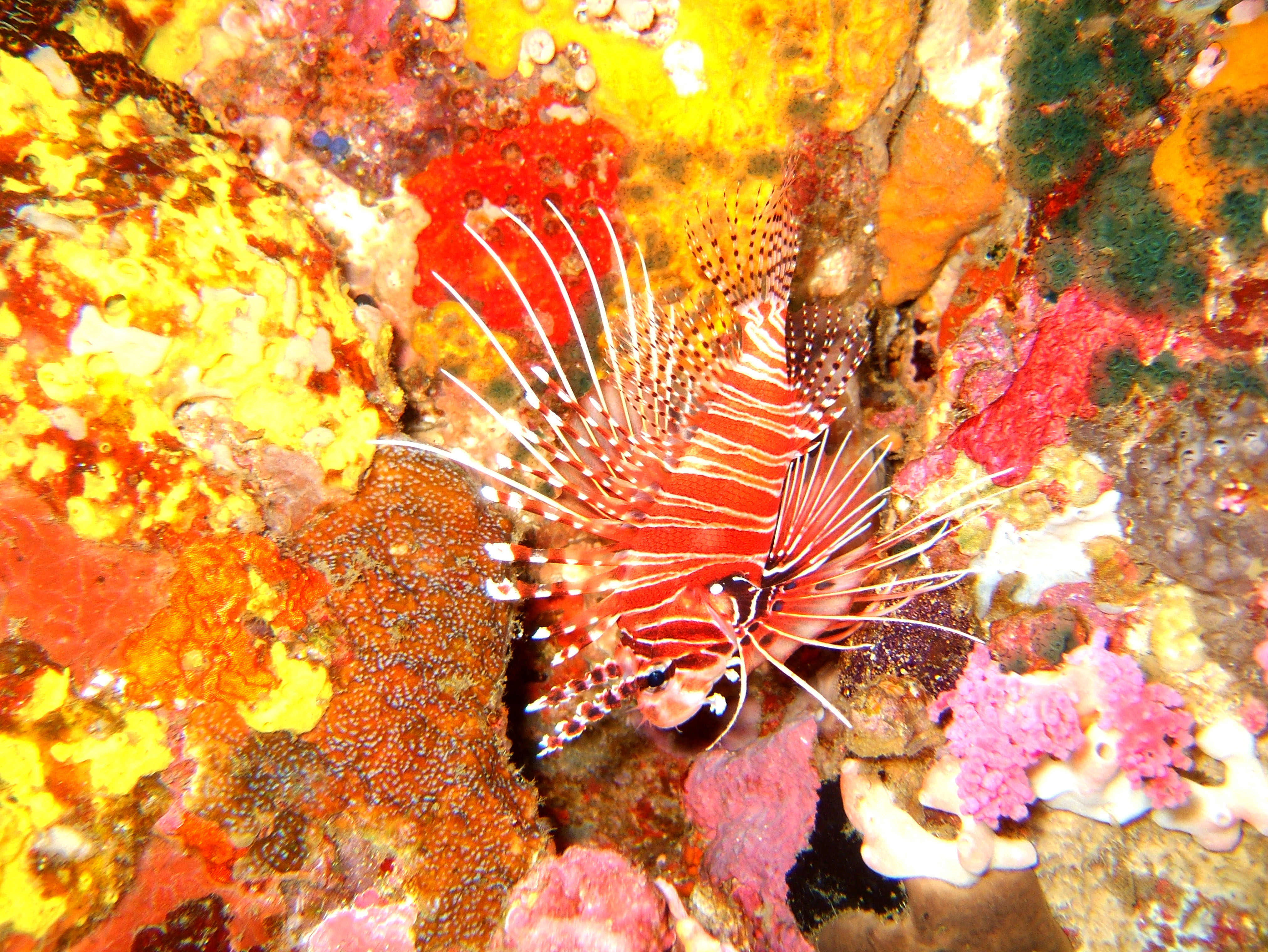 Dive 27 Philippines Mindoro Verdi Island Nov 2005 13