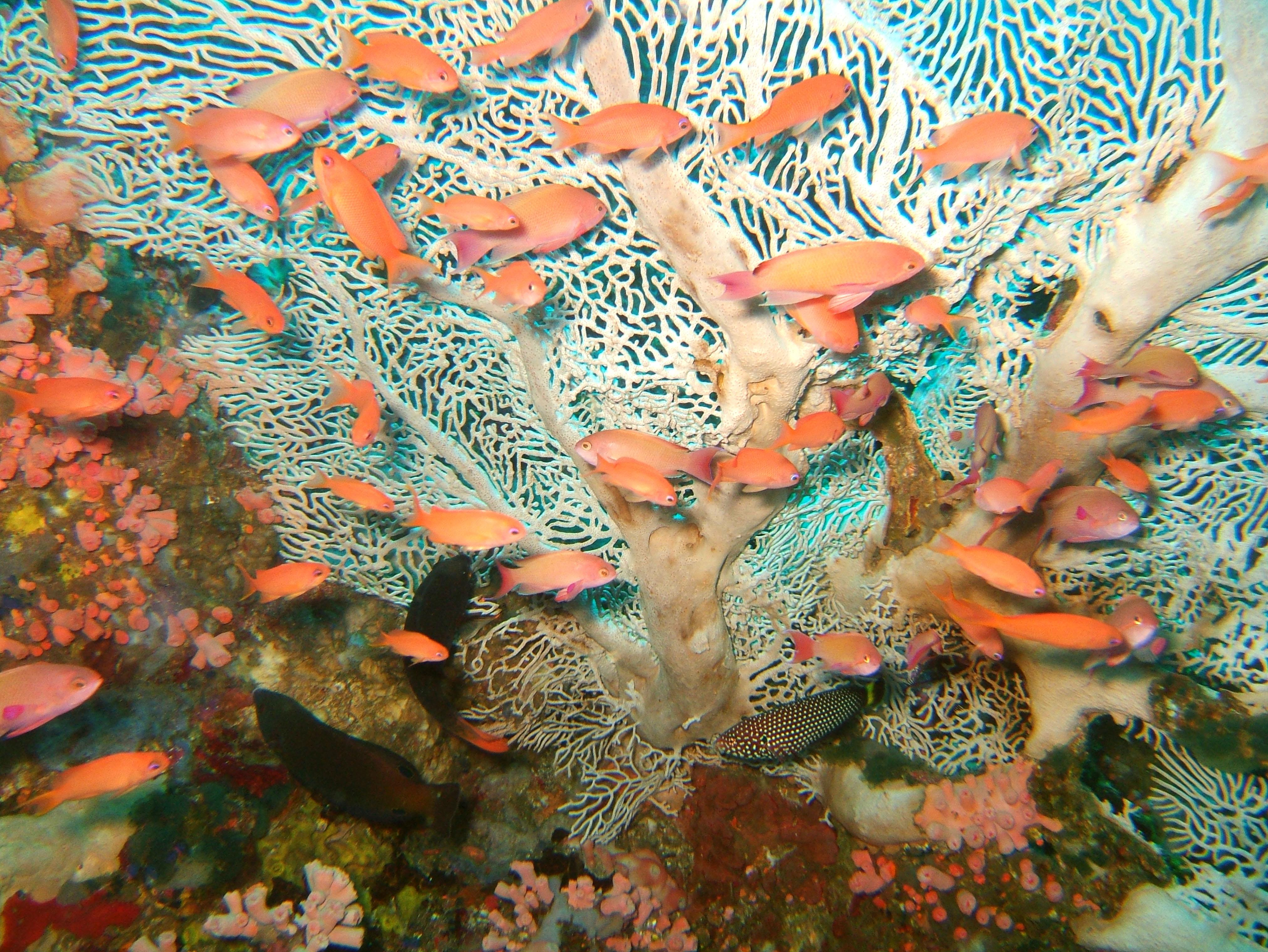 Dive 27 Philippines Mindoro Verdi Island Nov 2005 14