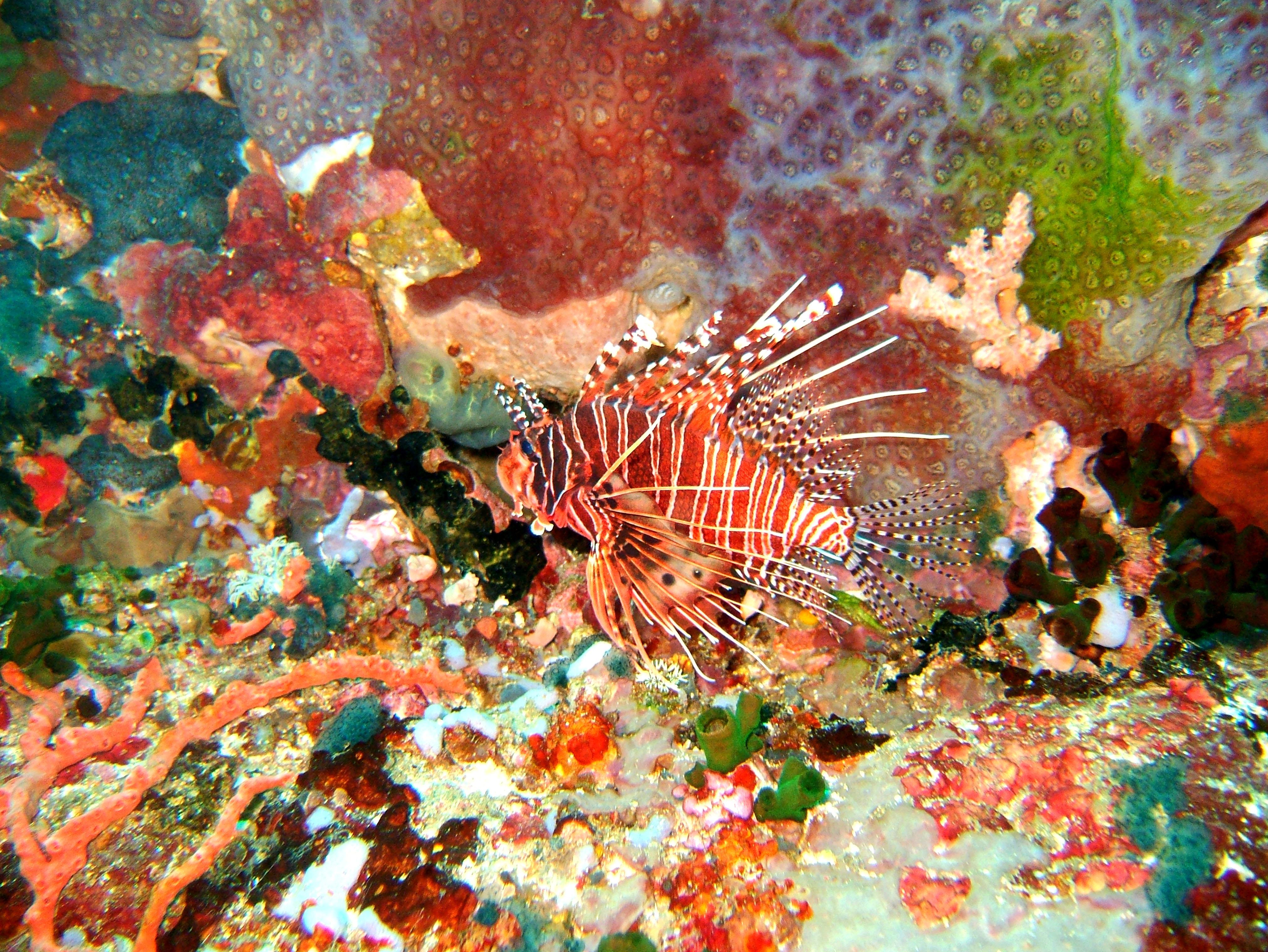 Dive 27 Philippines Mindoro Verdi Island Nov 2005 17