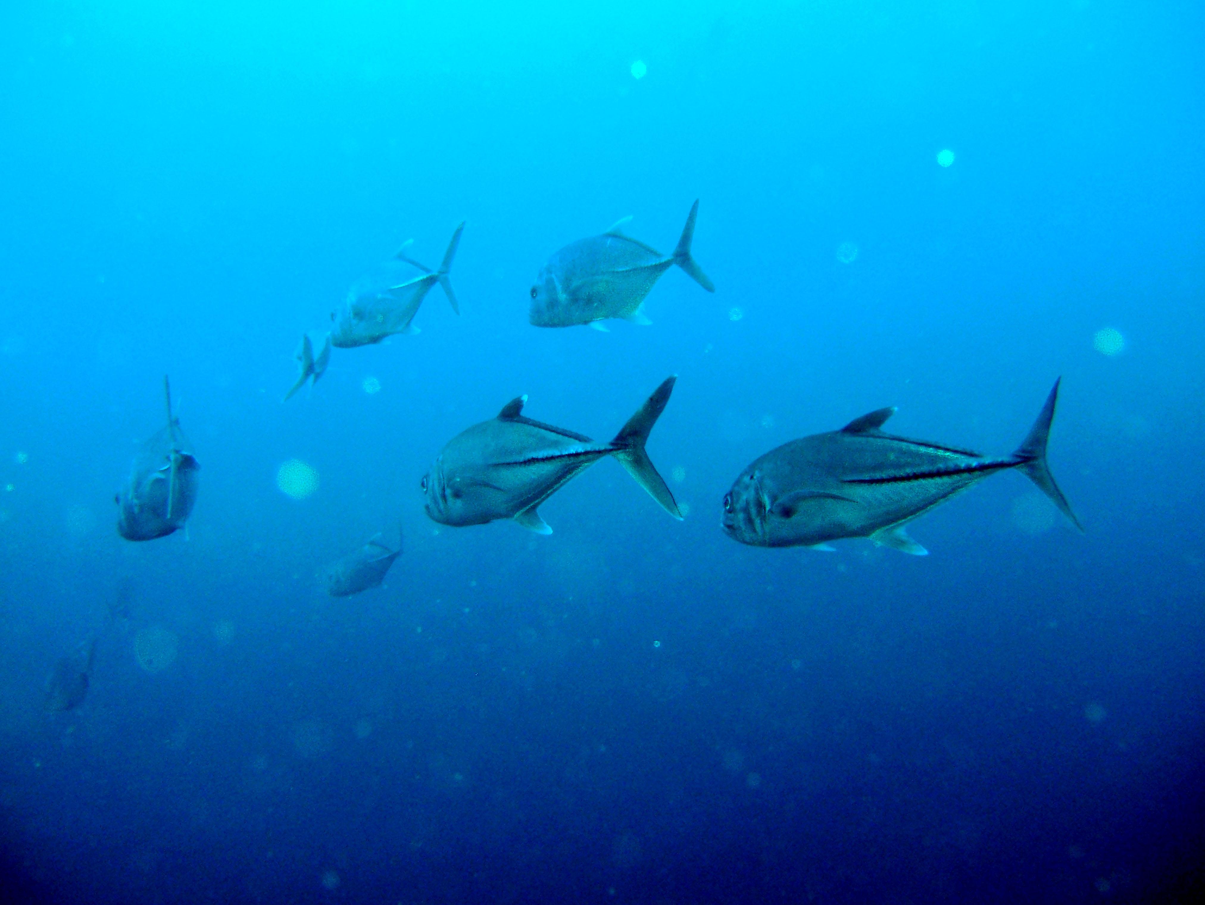 Dive 27 Philippines Mindoro Verdi Island Nov 2005 19