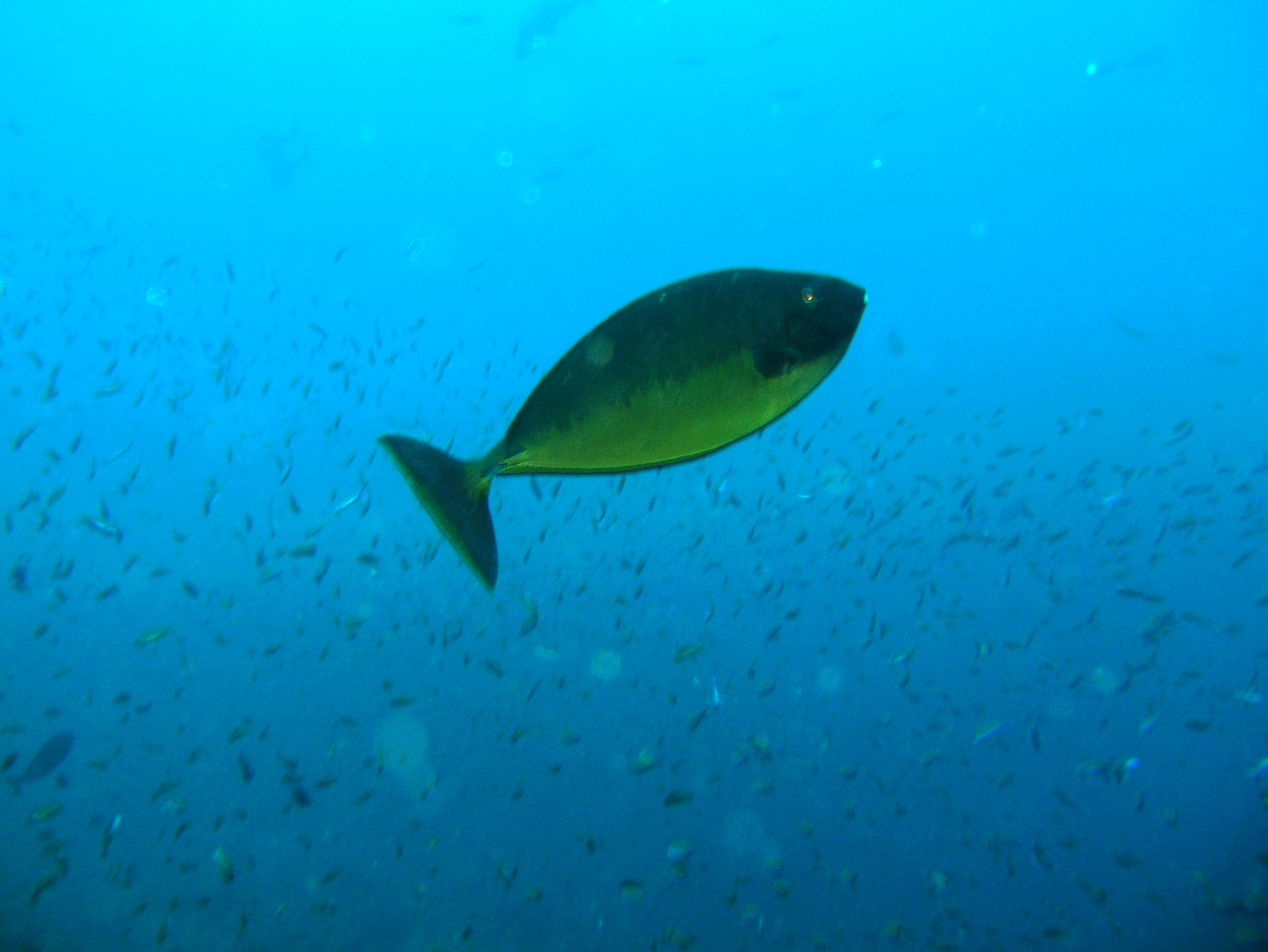 Dive 27 Philippines Mindoro Verdi Island Nov 2005 20