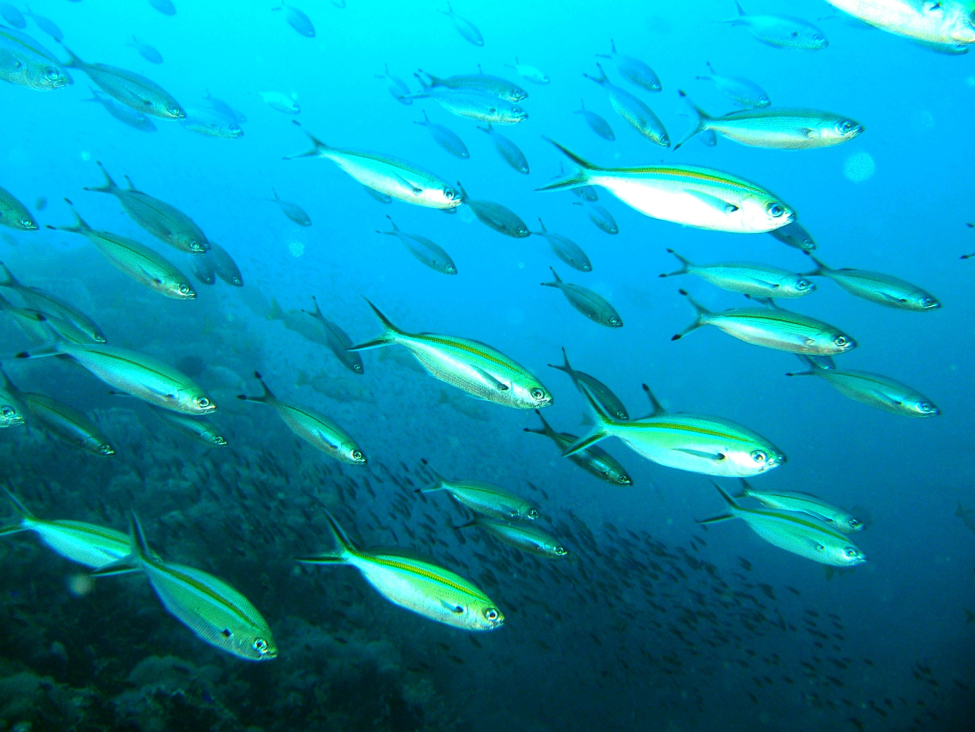 Dive 27 Philippines Mindoro Verdi Island Nov 2005 21