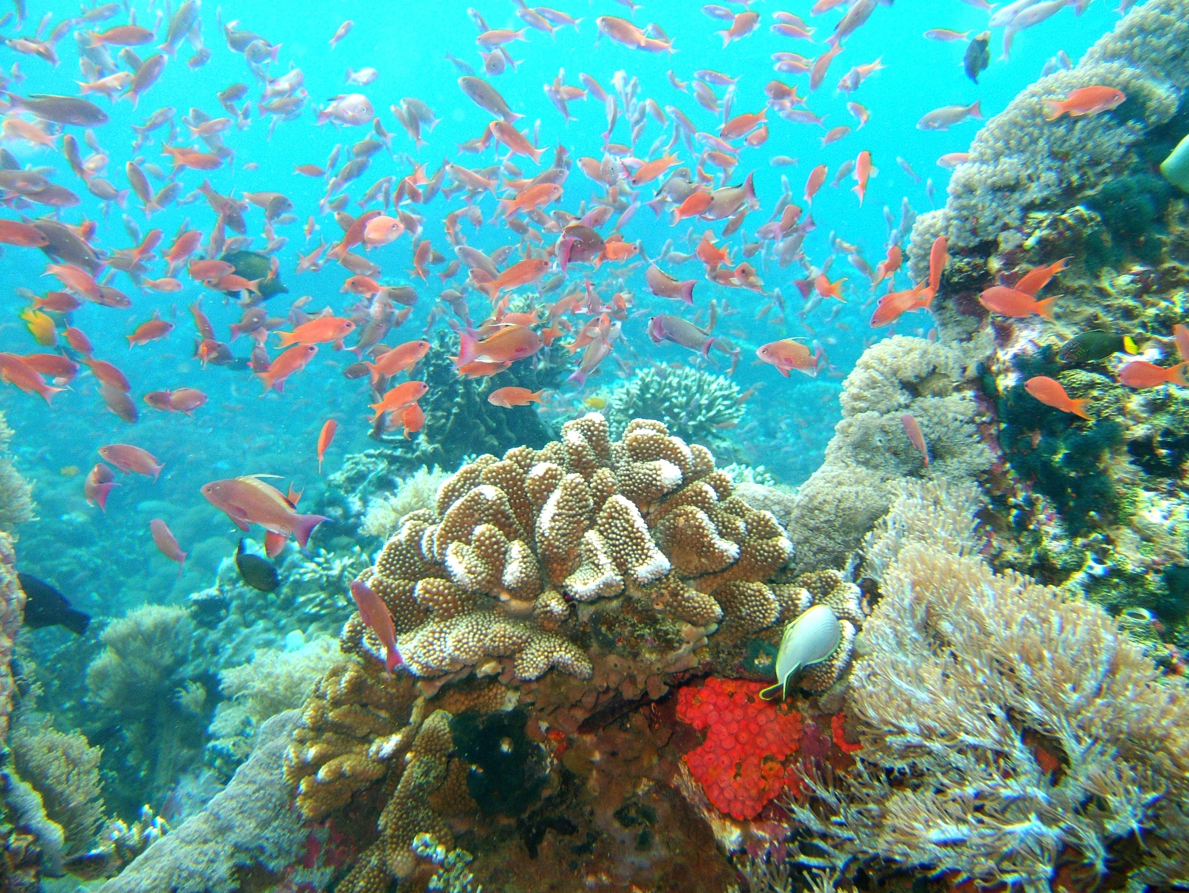 Dive 27 Philippines Mindoro Verdi Island Nov 2005 25