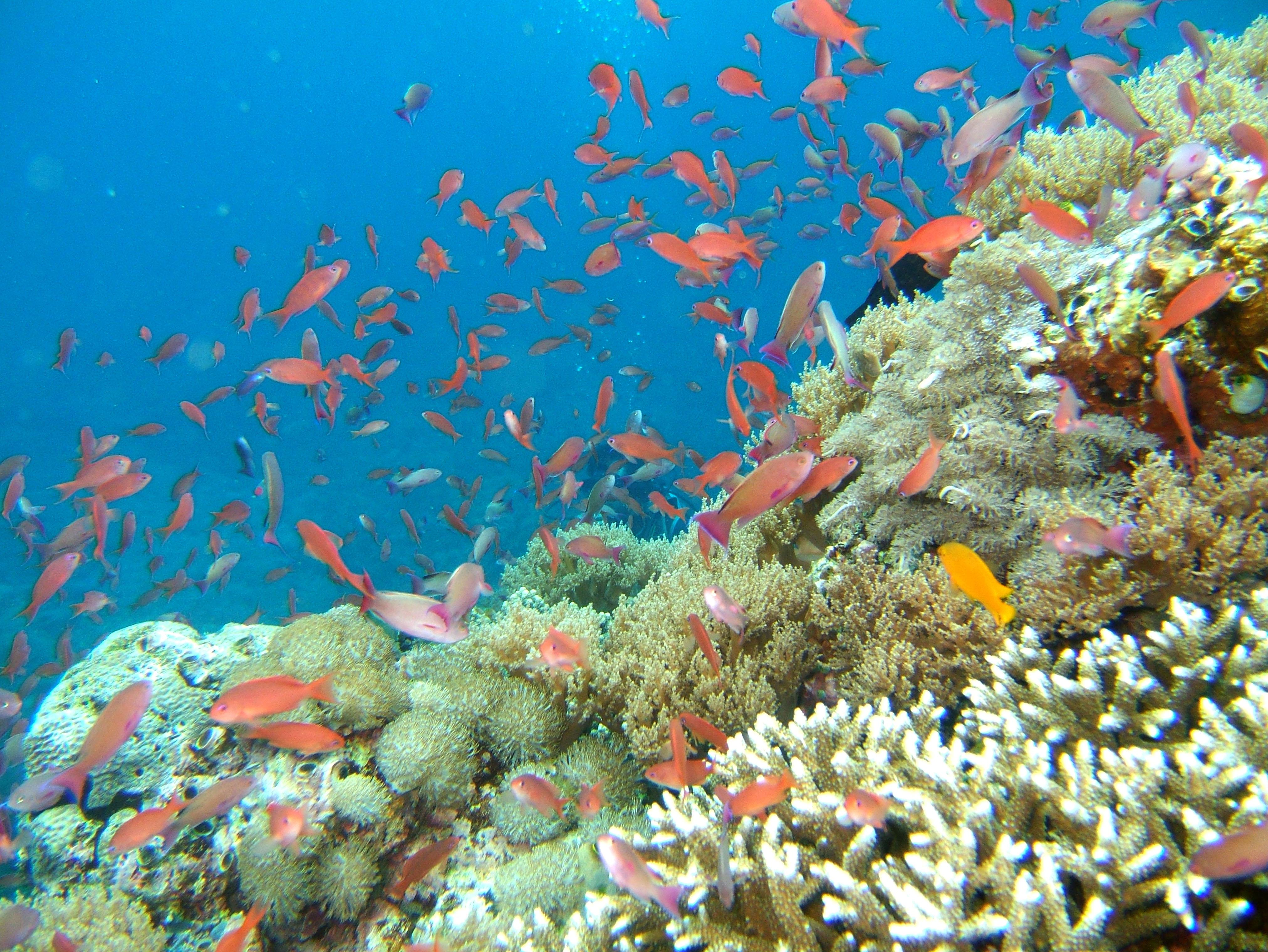 Dive 27 Philippines Mindoro Verdi Island Nov 2005 28