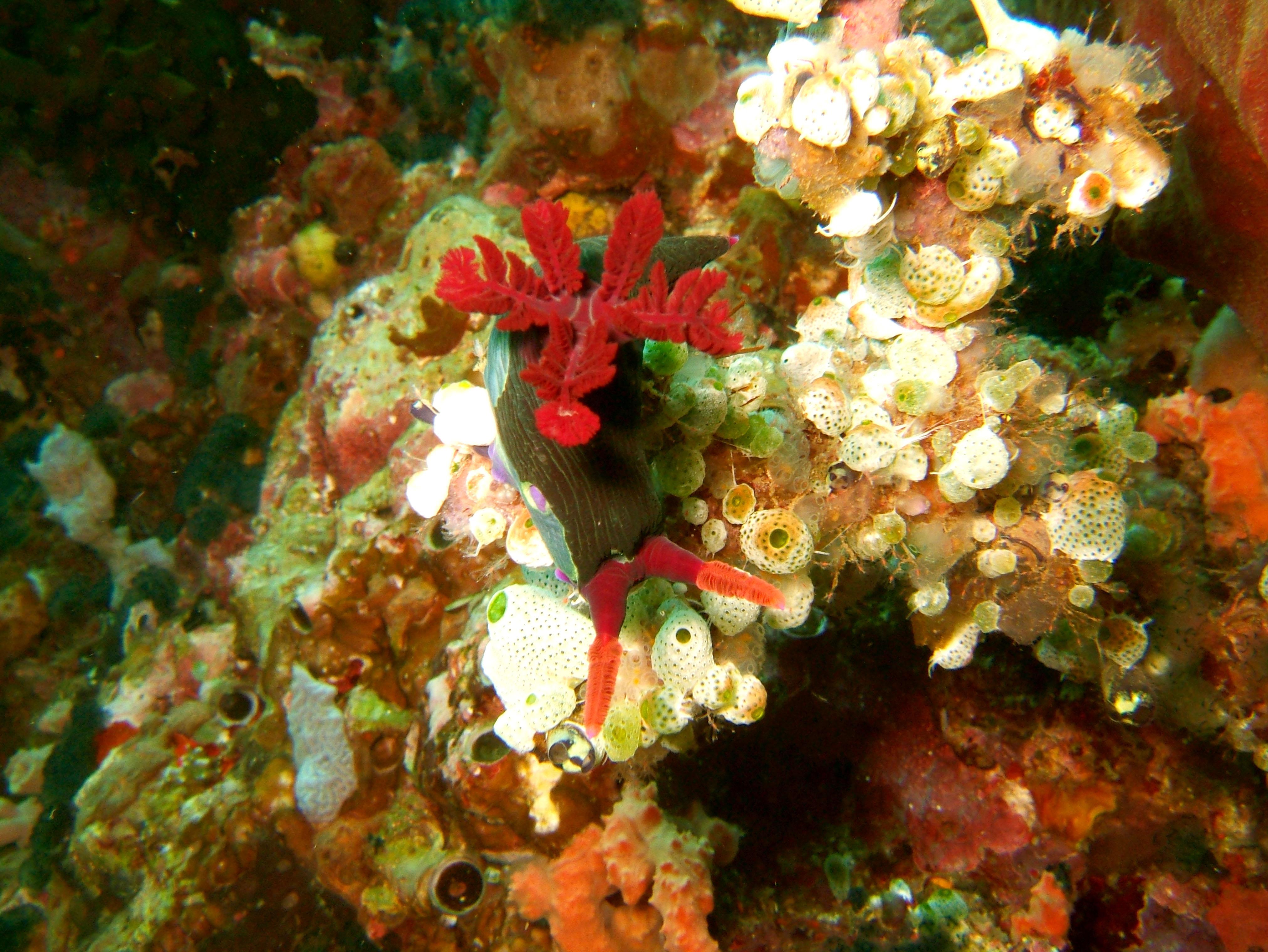Dive 27 Philippines Mindoro Verdi Island Nov 2005 31