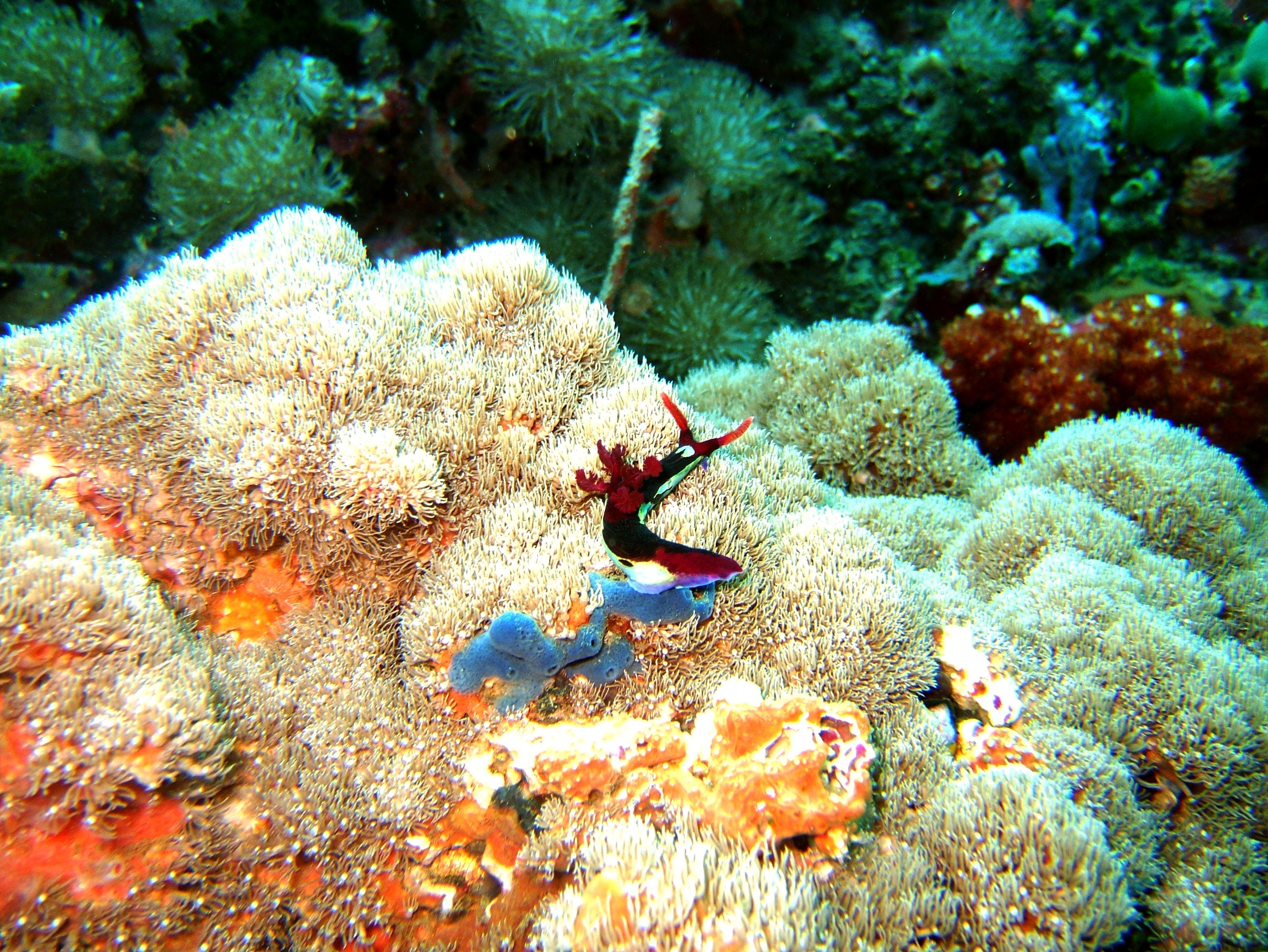 Dive 27 Philippines Mindoro Verdi Island Nov 2005 35