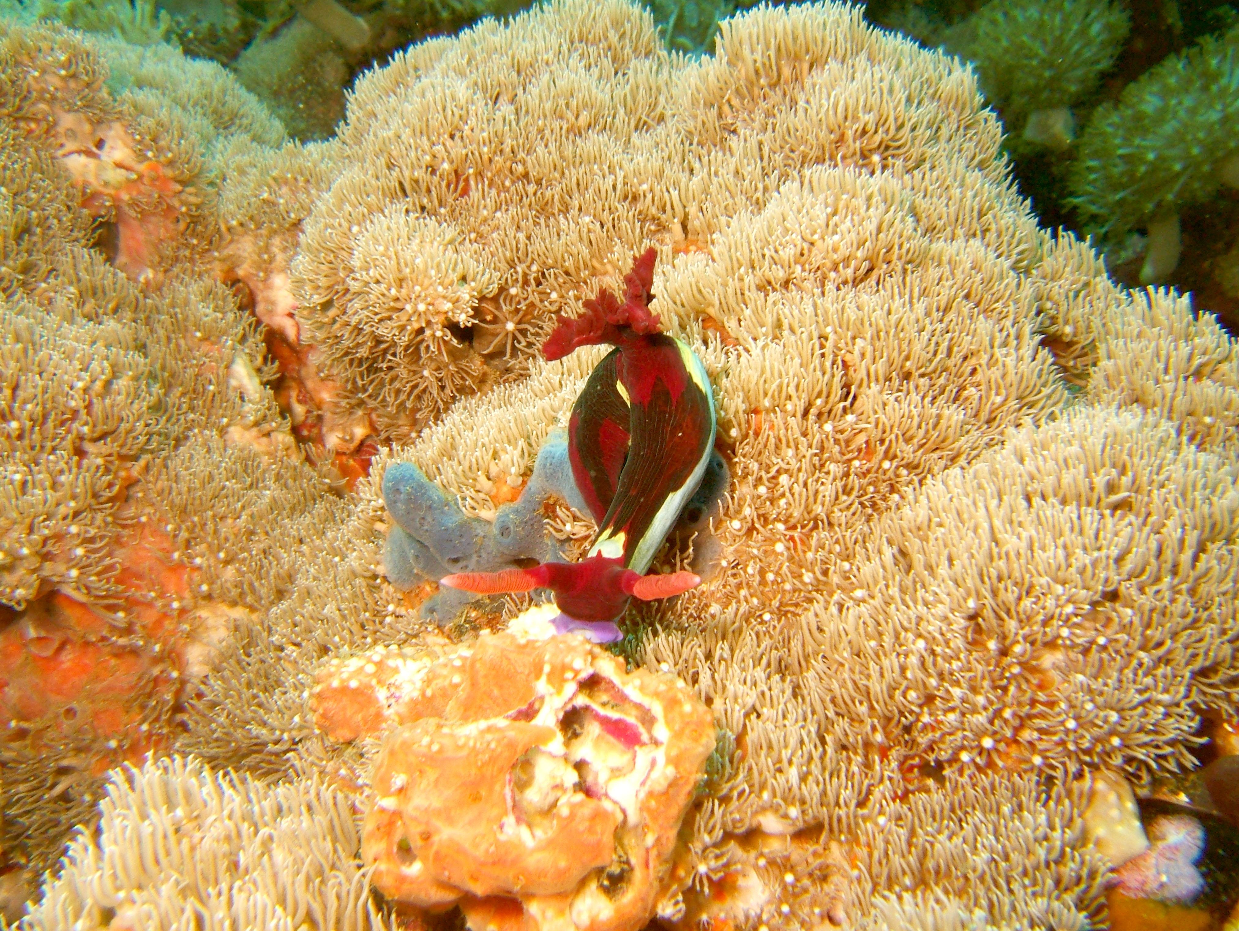 Dive 27 Philippines Mindoro Verdi Island Nov 2005 37
