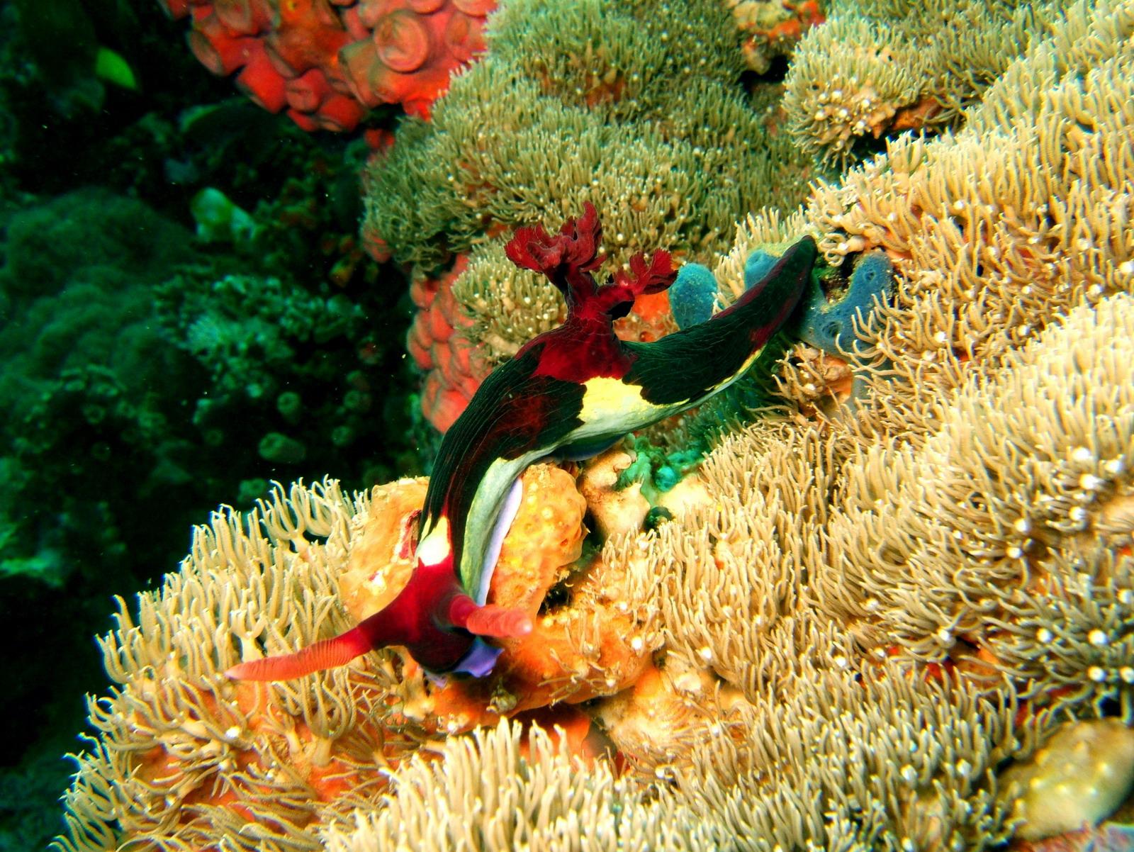 Dive 27 Philippines Mindoro Verdi Island Nov 2005 39