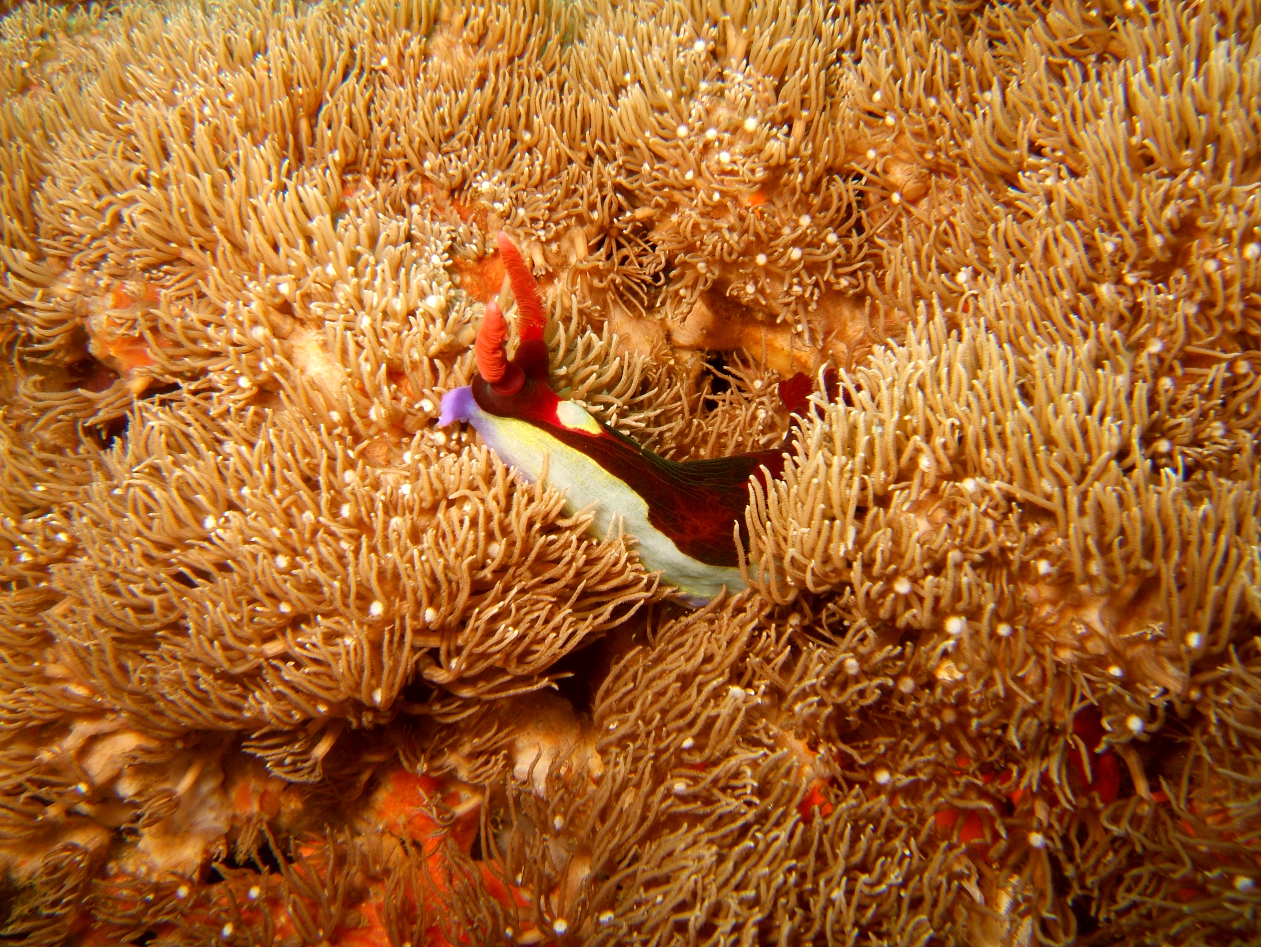 Dive 27 Philippines Mindoro Verdi Island Nov 2005 42