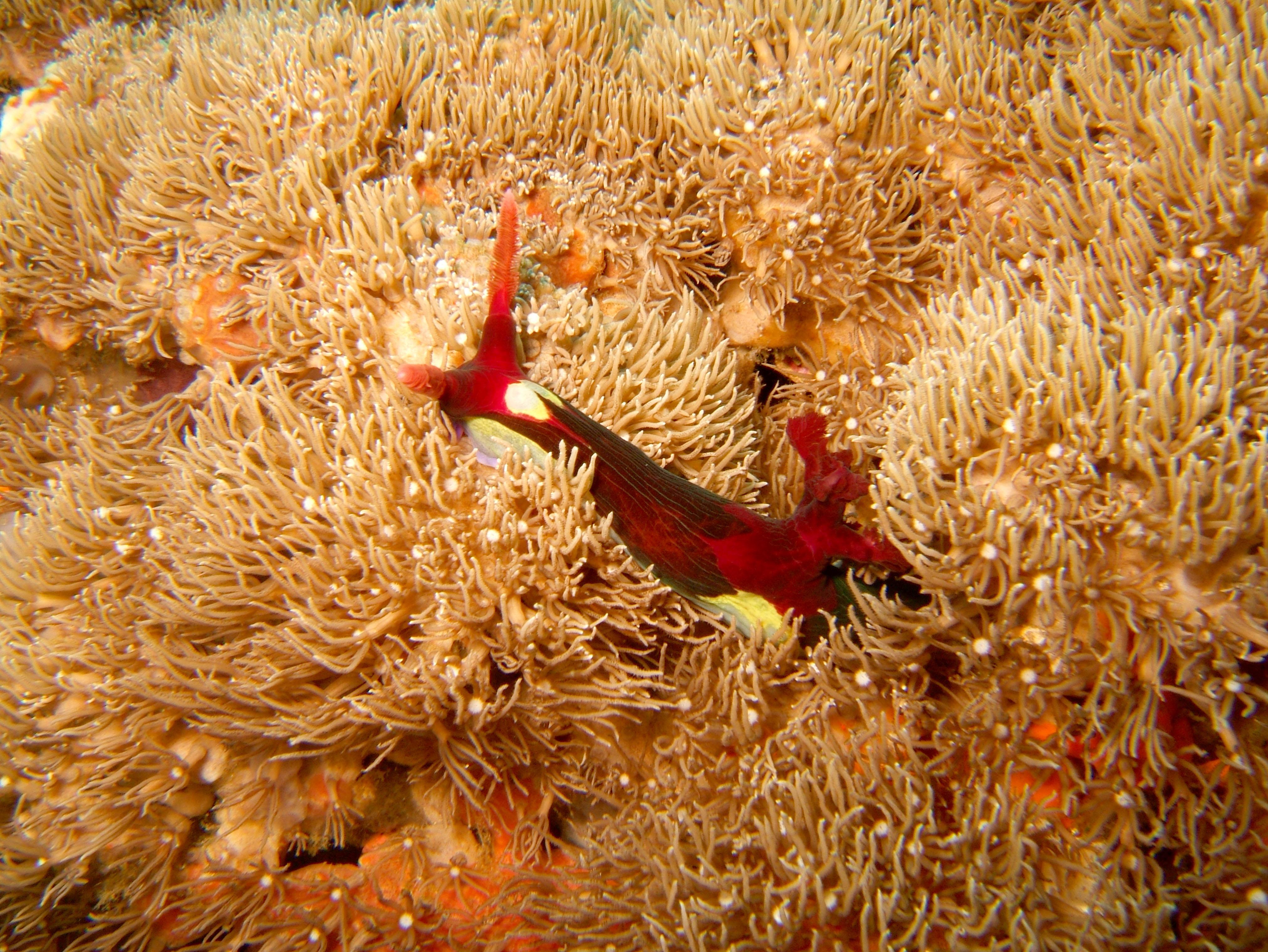 Dive 27 Philippines Mindoro Verdi Island Nov 2005 43