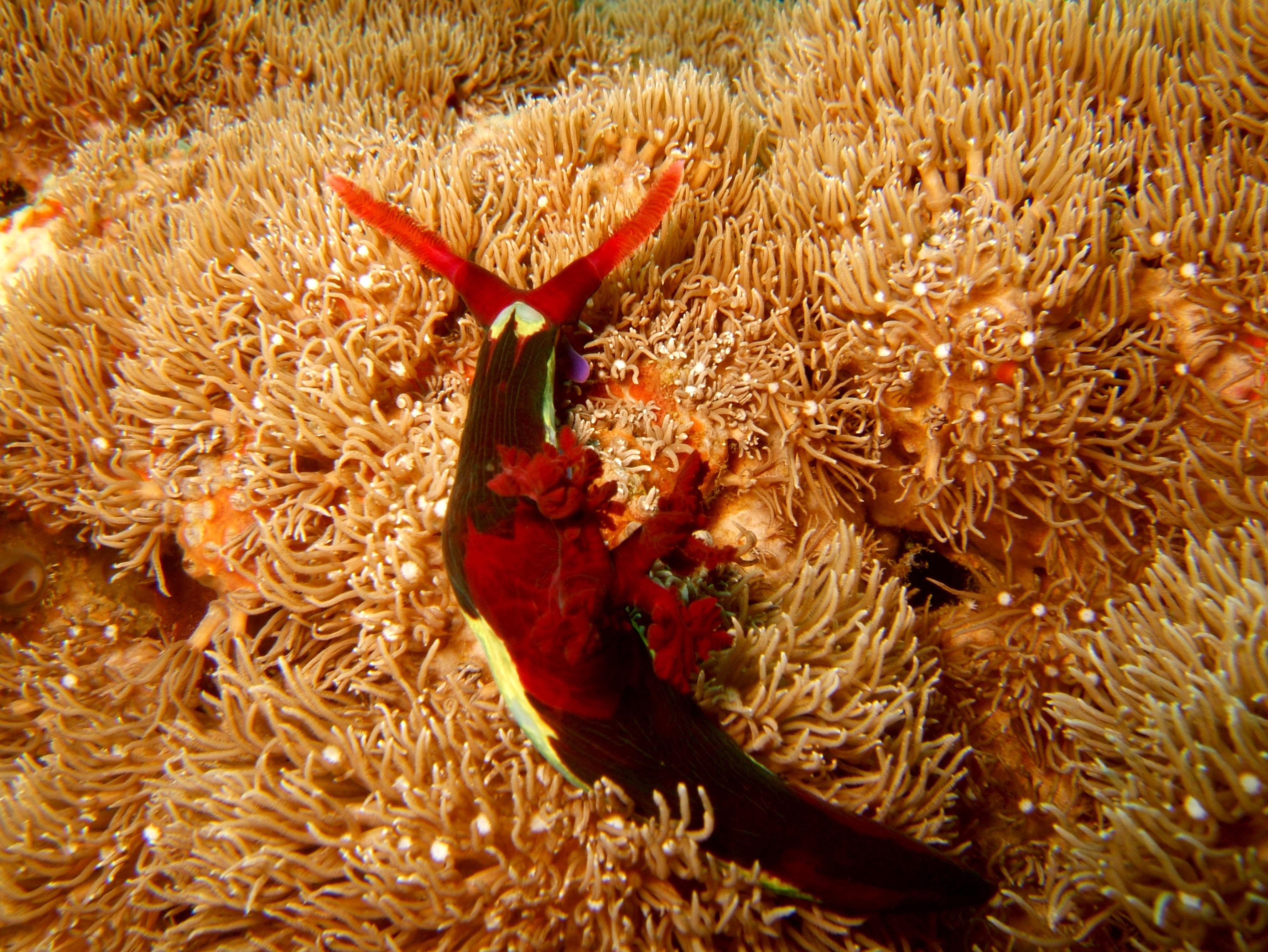 Dive 27 Philippines Mindoro Verdi Island Nov 2005 44